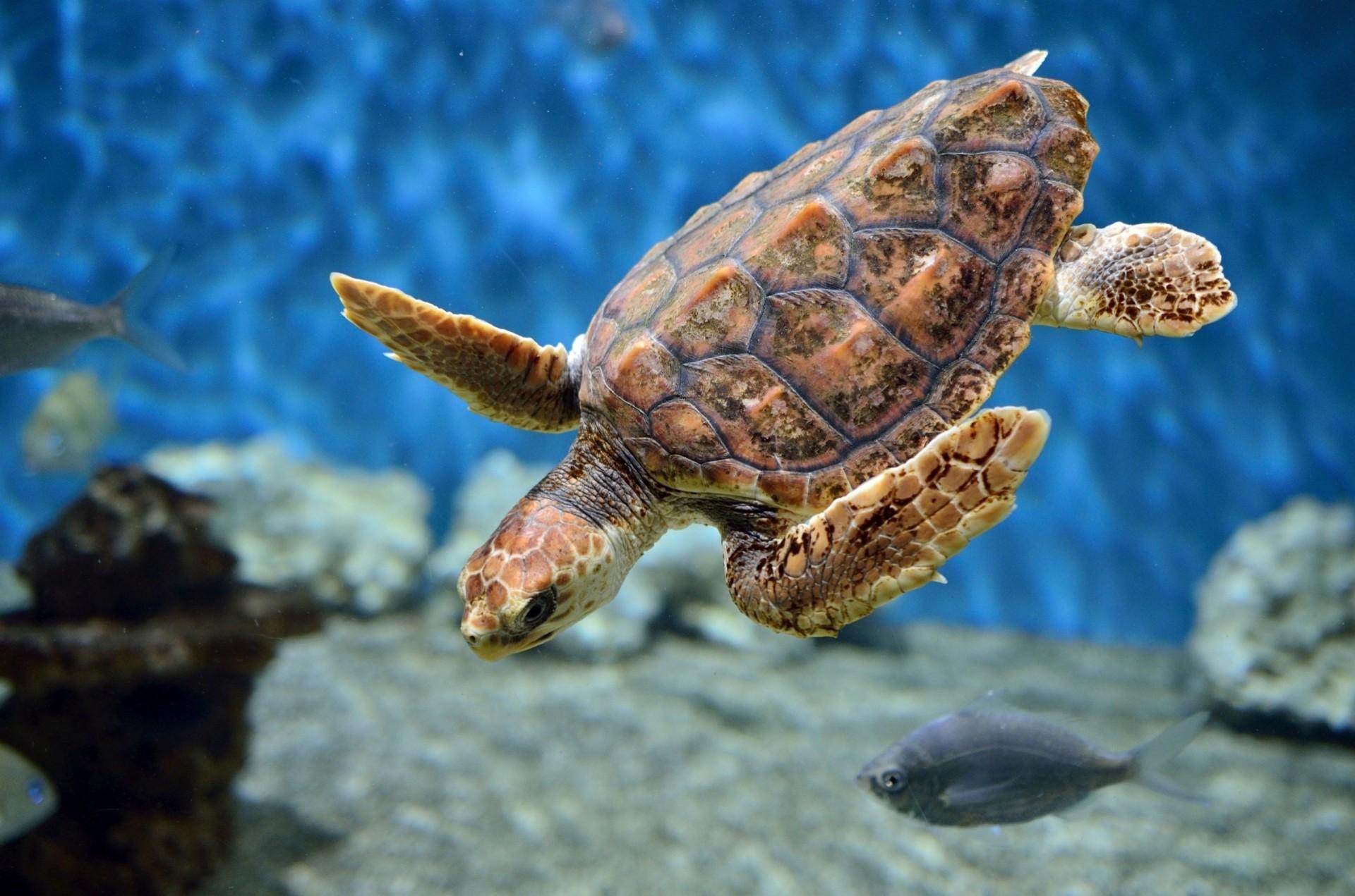 К чему снится черепаха женщине — толкование в сонниках.