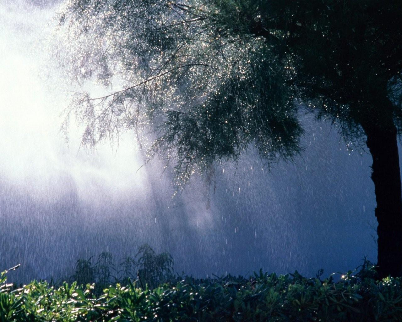 Картинка дождь в лесу
