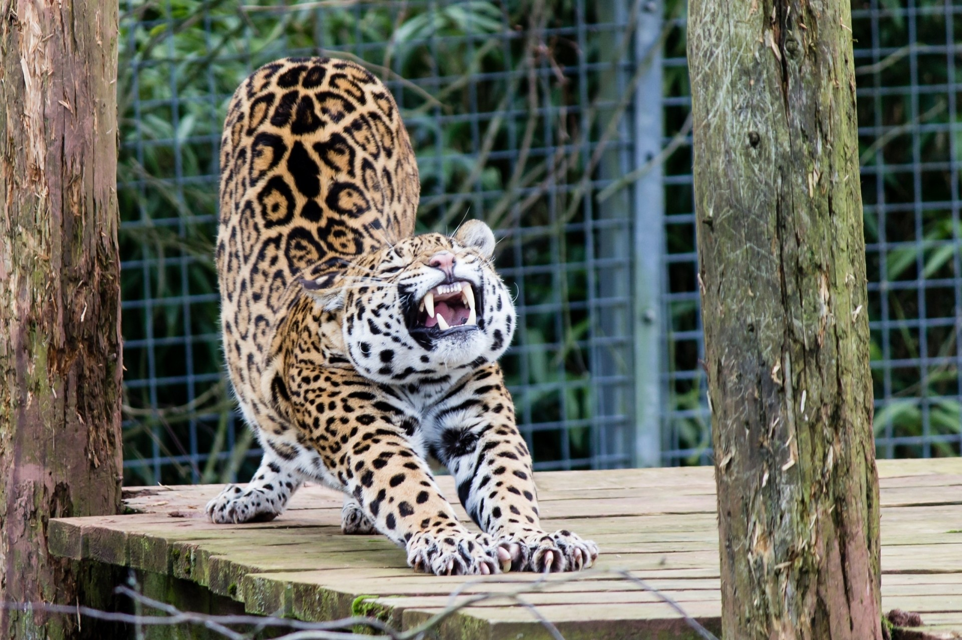 Смешные картинки из зоопарка, картинки