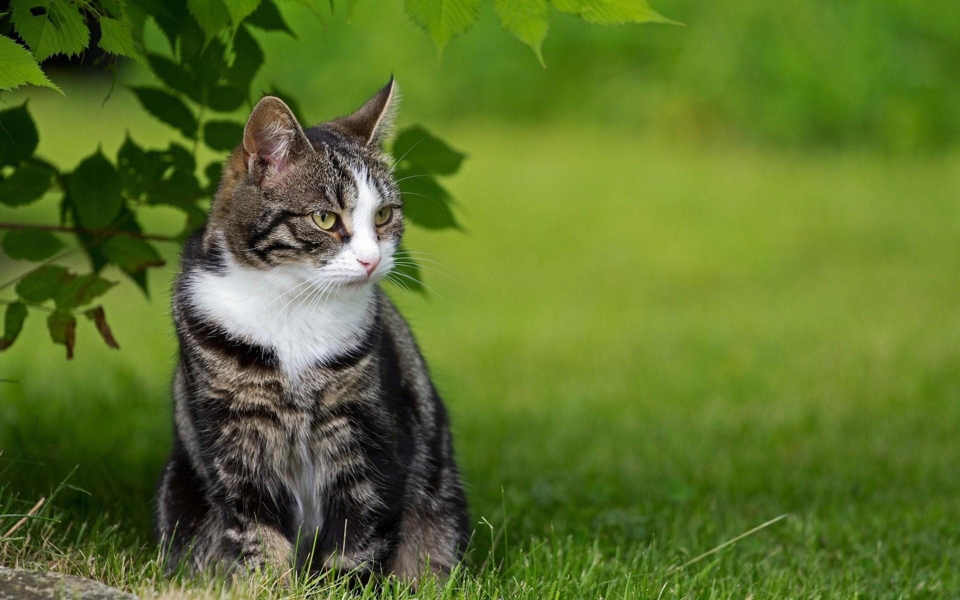 красивые коты на обои повседневной суеты