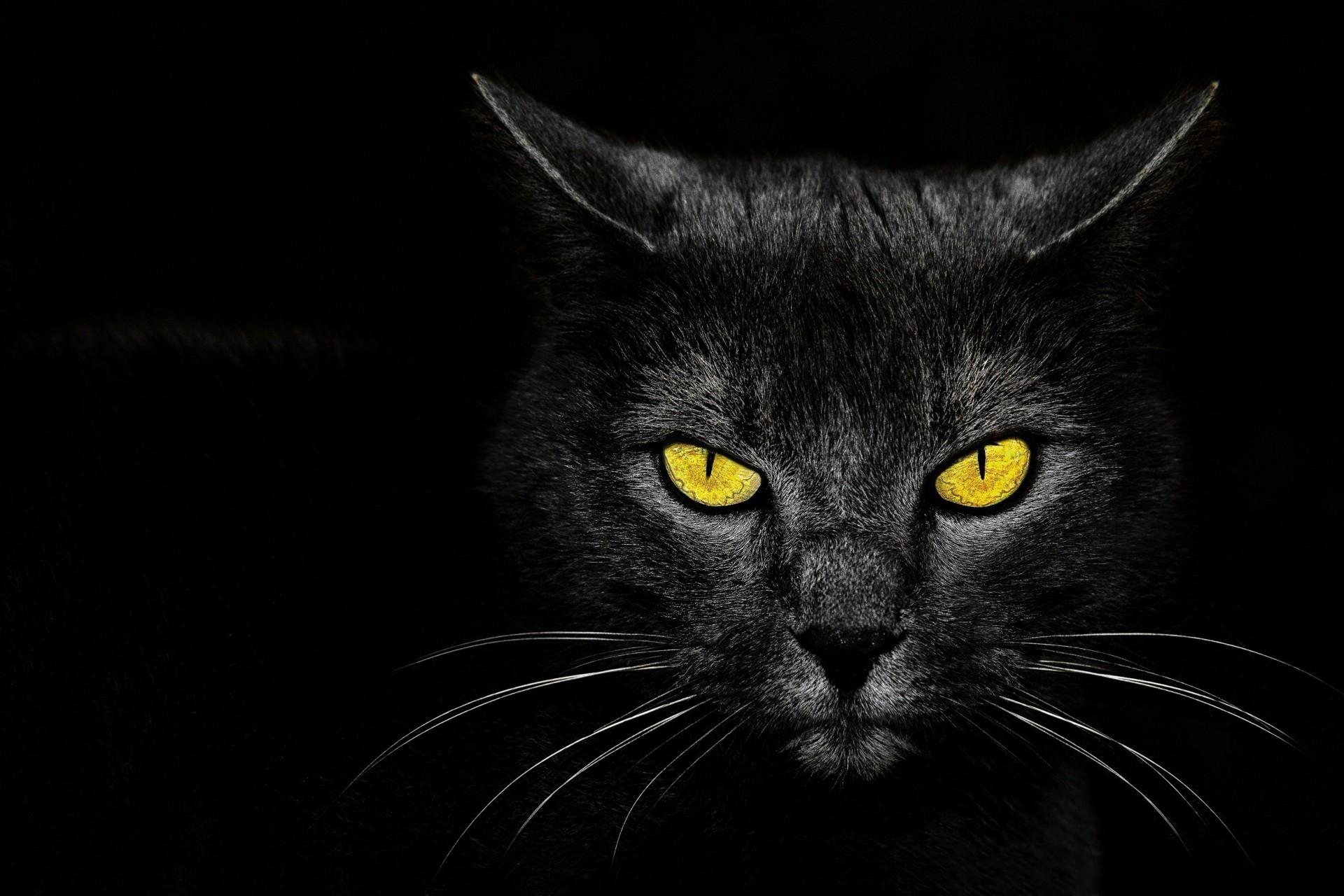 обои на рабочий стол глаза кошки на темном фоне № 237957 загрузить
