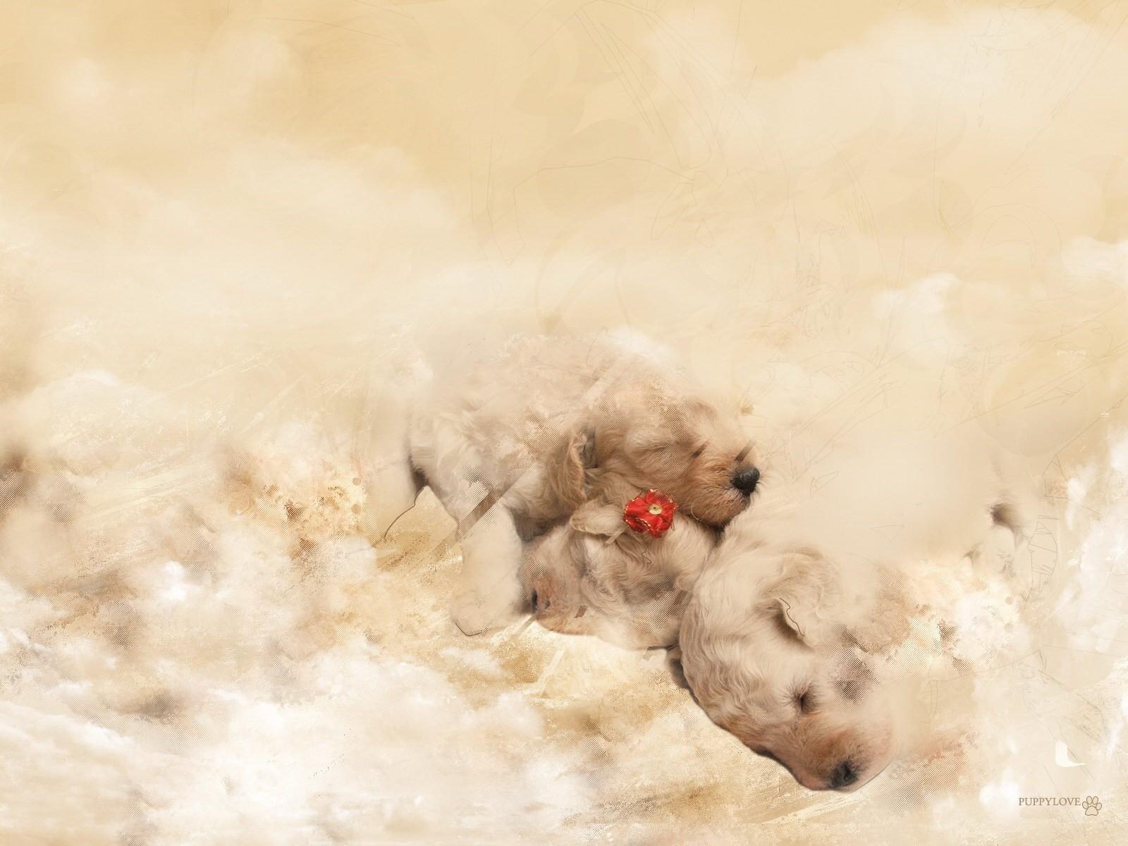 белый щенок плед бесплатно