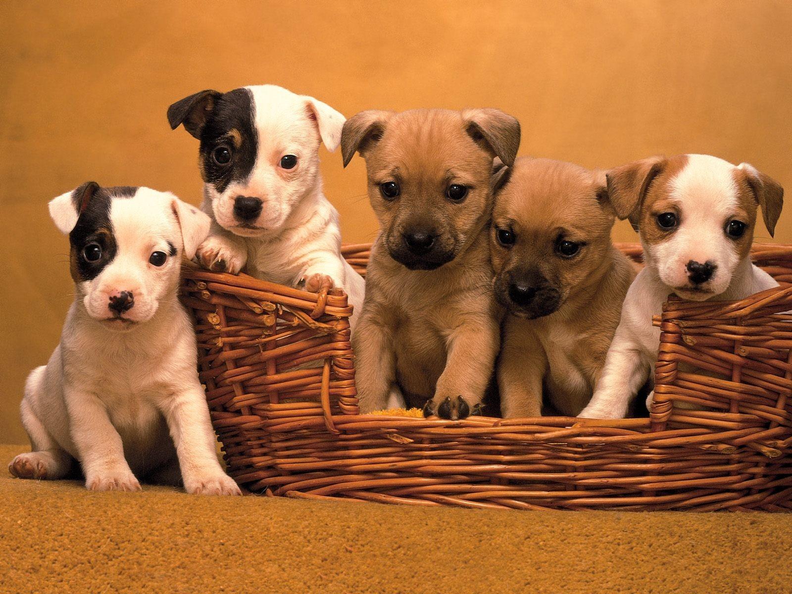 картинки собак щенки смотреть продаже домов