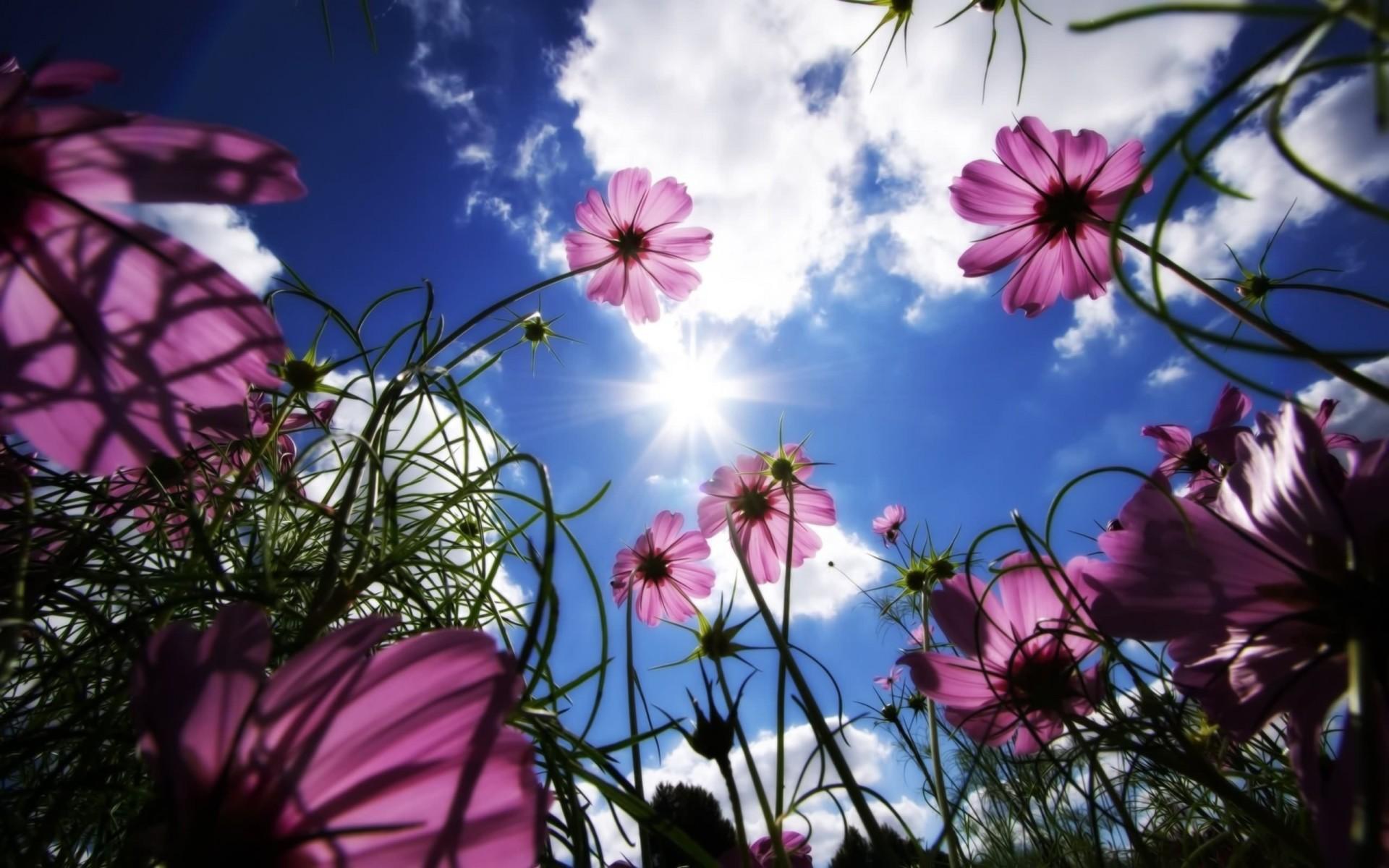 картинки красивая природа цветы небо фото авто делали