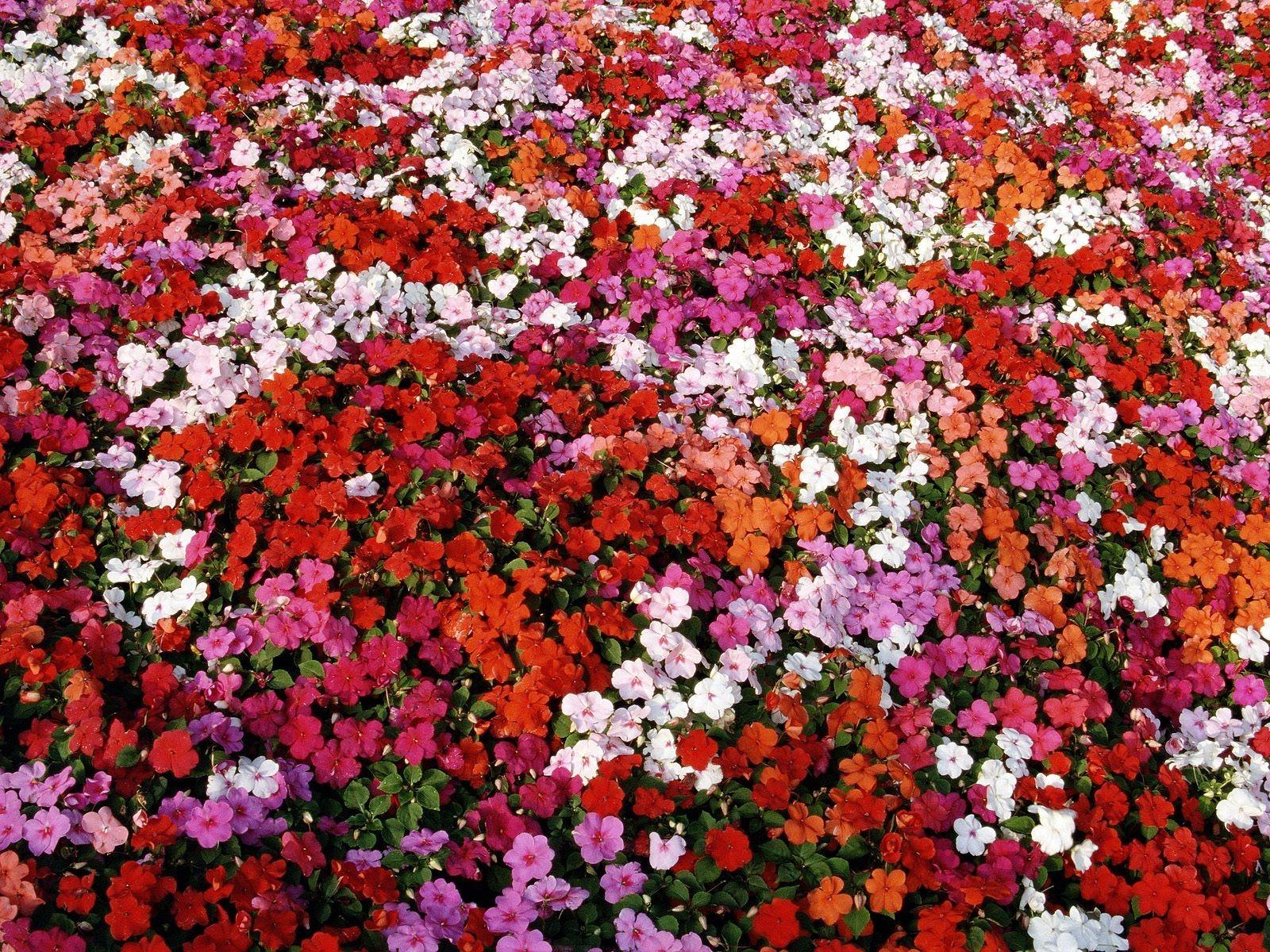 Дочки редкие, картинки море цветов из роз