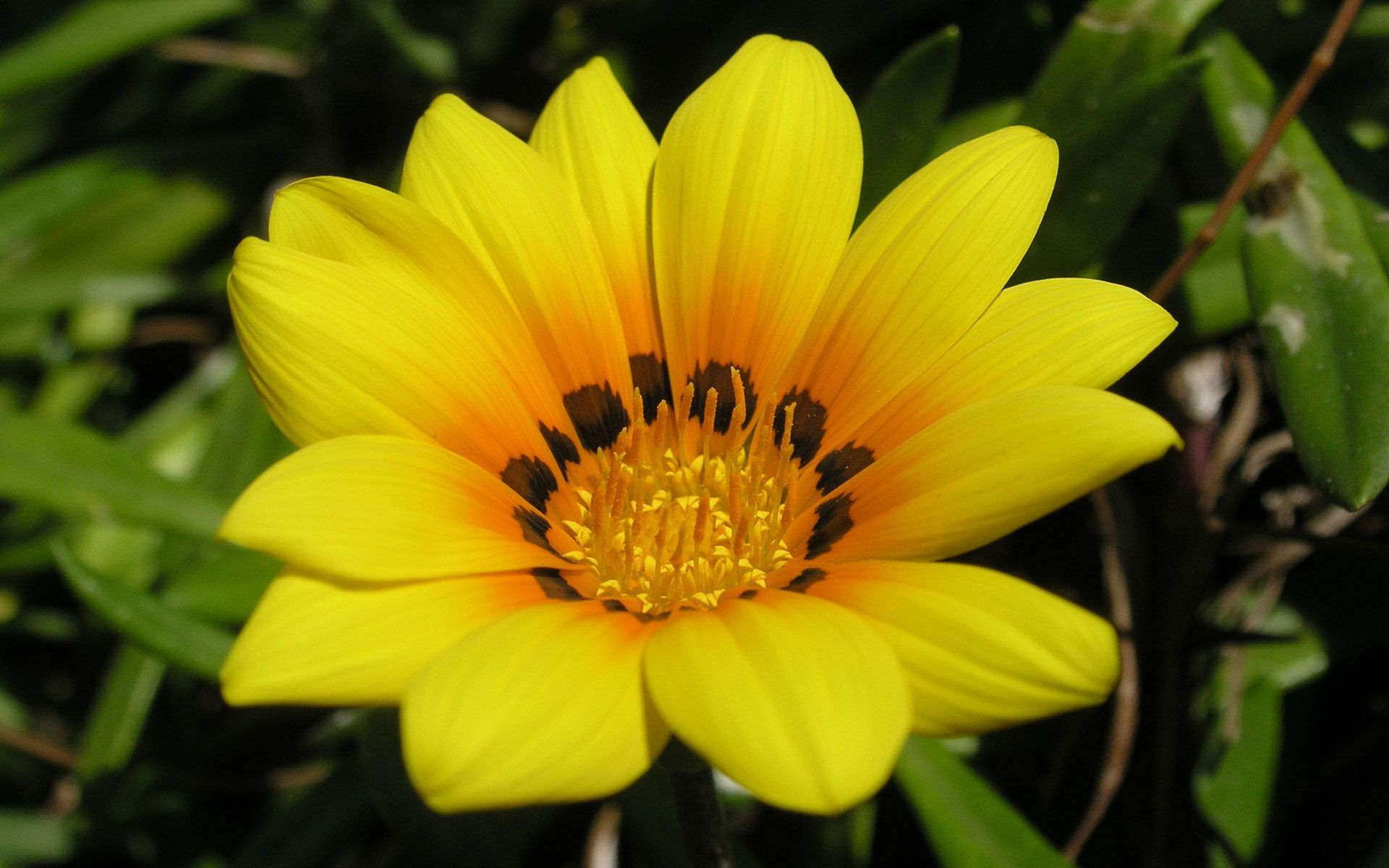 желтым картинки красивые с цветом