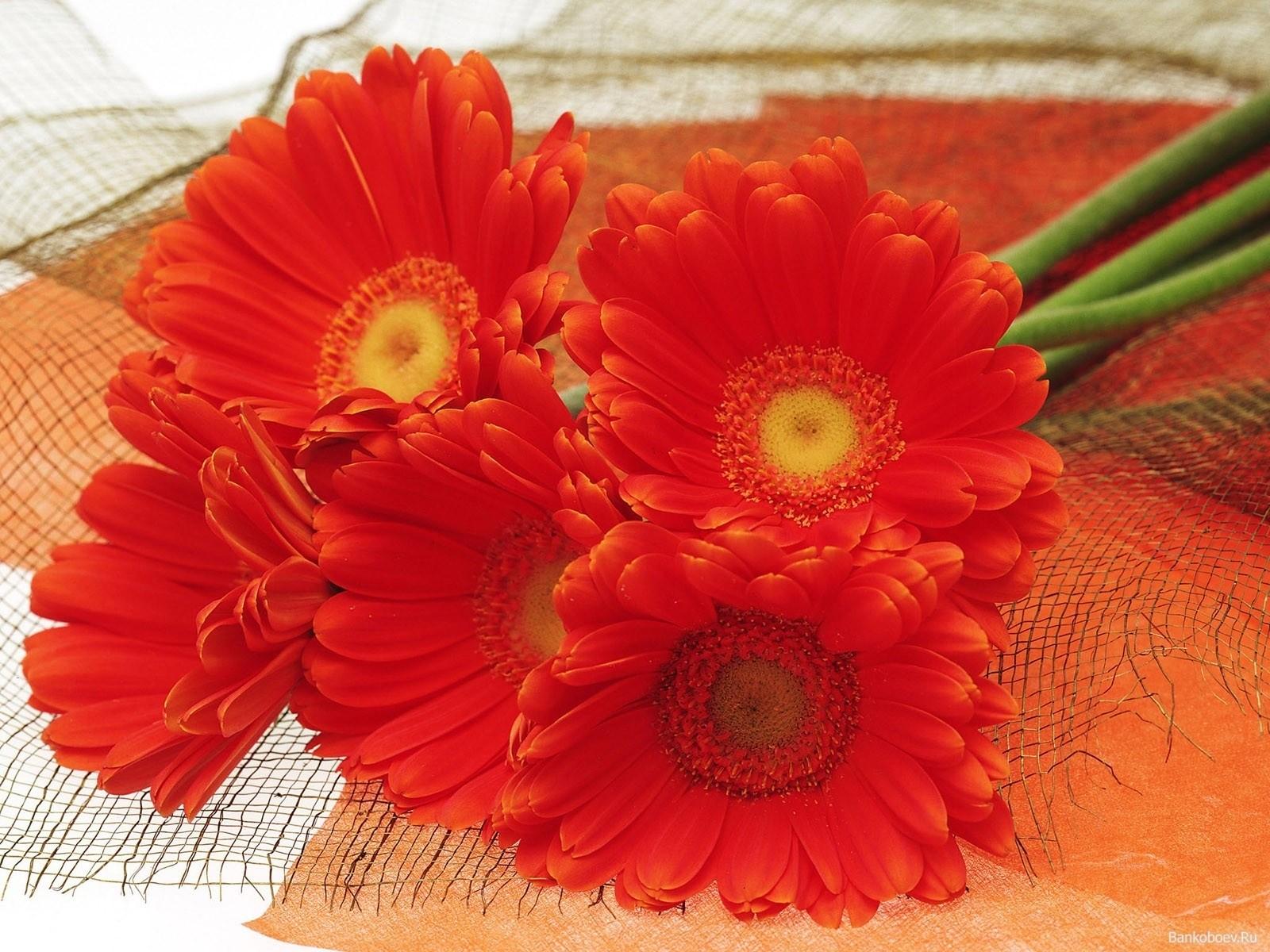 День, открытки оранжевое лето