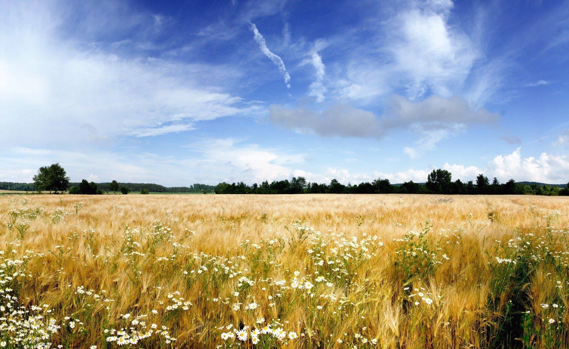 природа небо облака трава горизонт загрузить