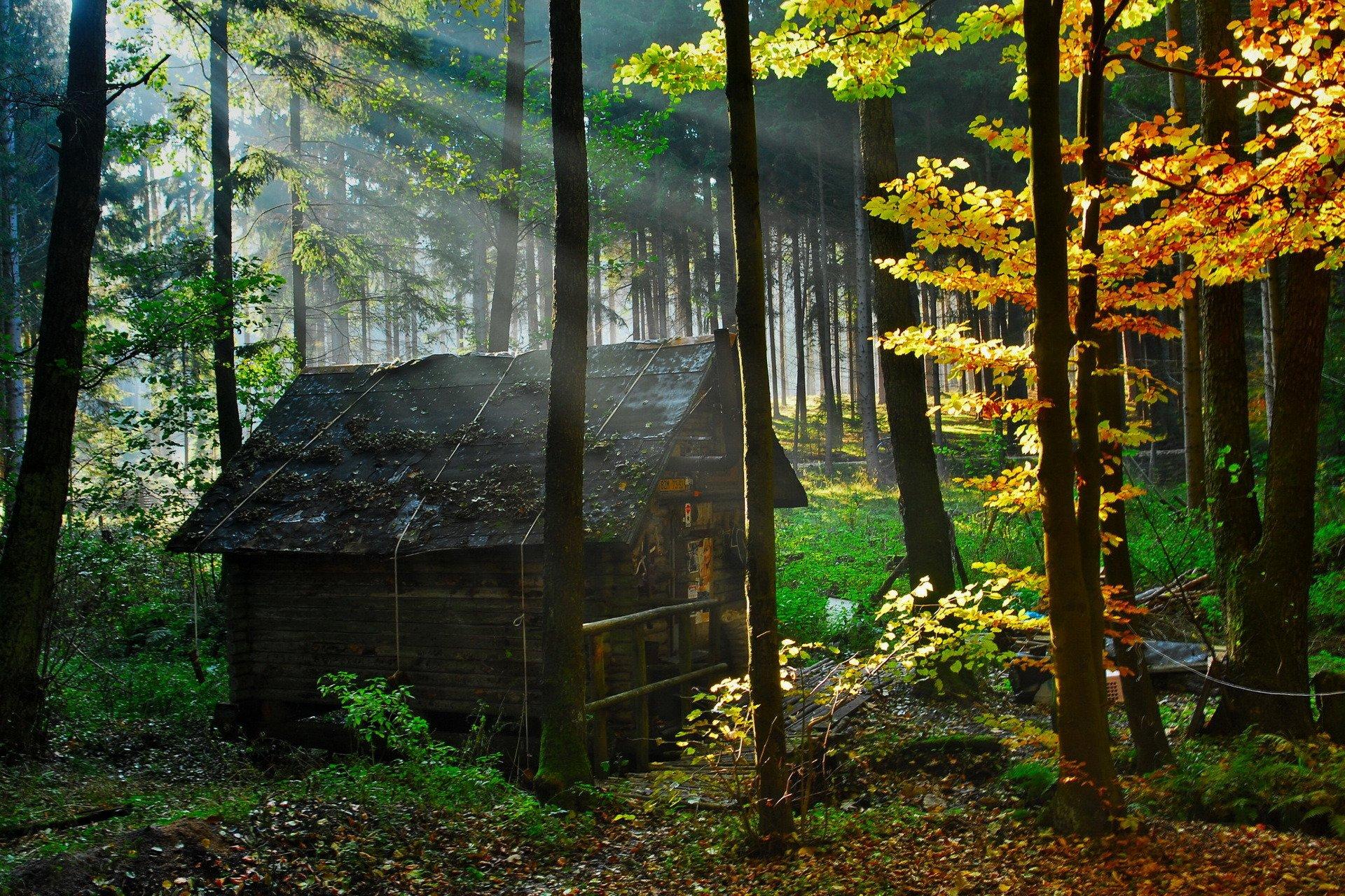 дизайн дом в чаще леса картинка можете заказать