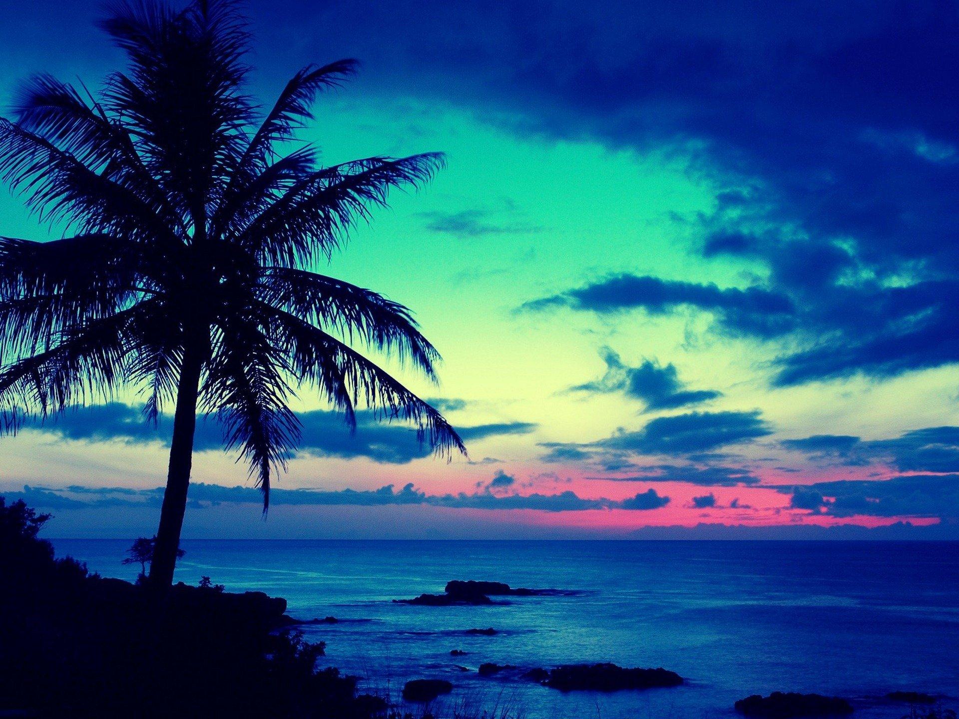 деревья, тропики, лето, гавайи скачать