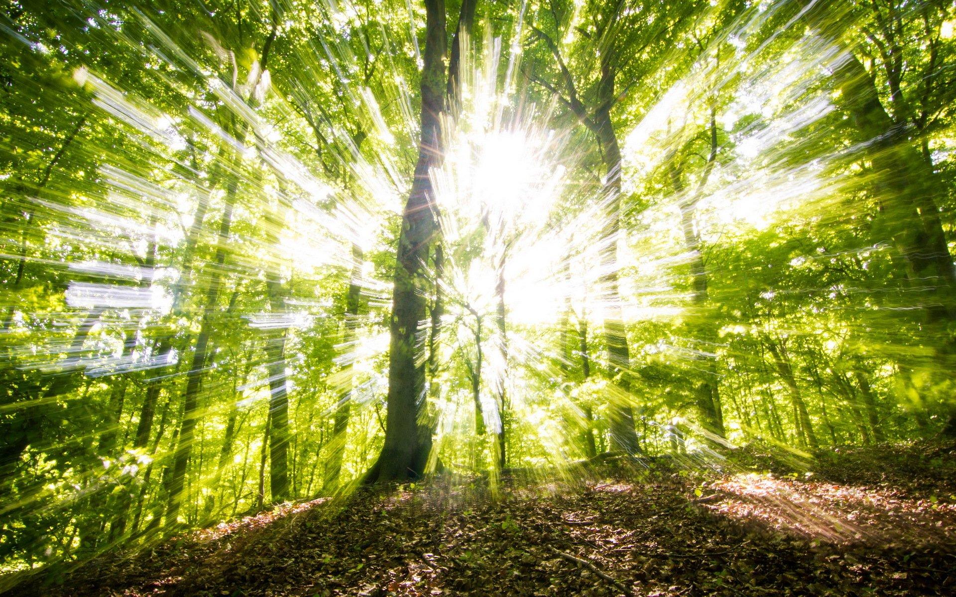 лес деревья солнечные лучи  № 917619  скачать