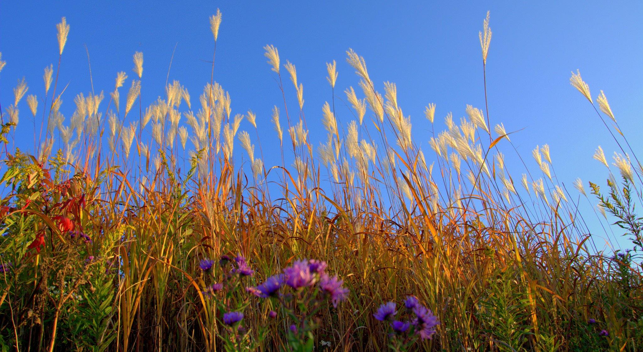 Трава цветы поле луг скачать
