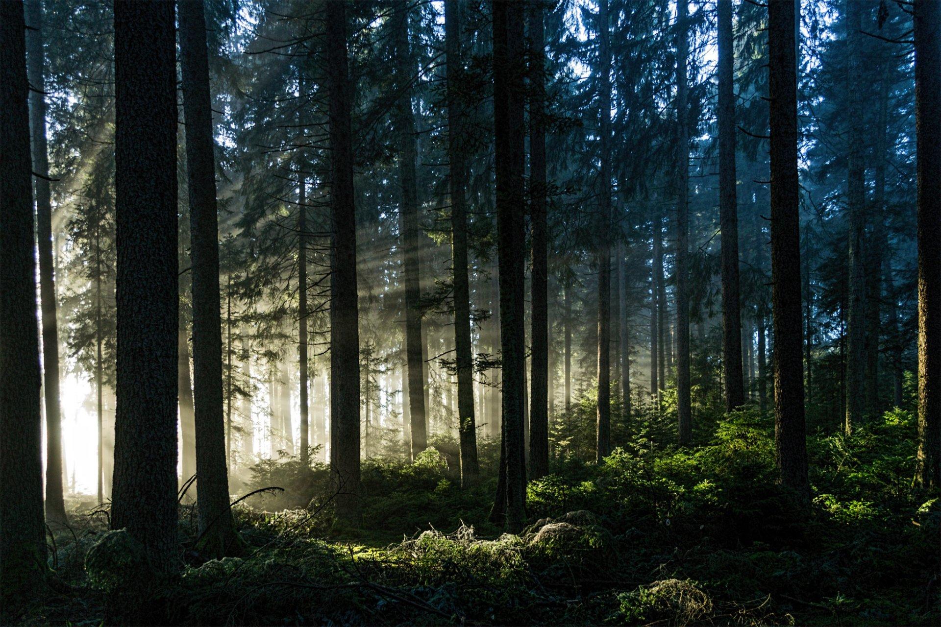 картинки густой лес классного руководителя