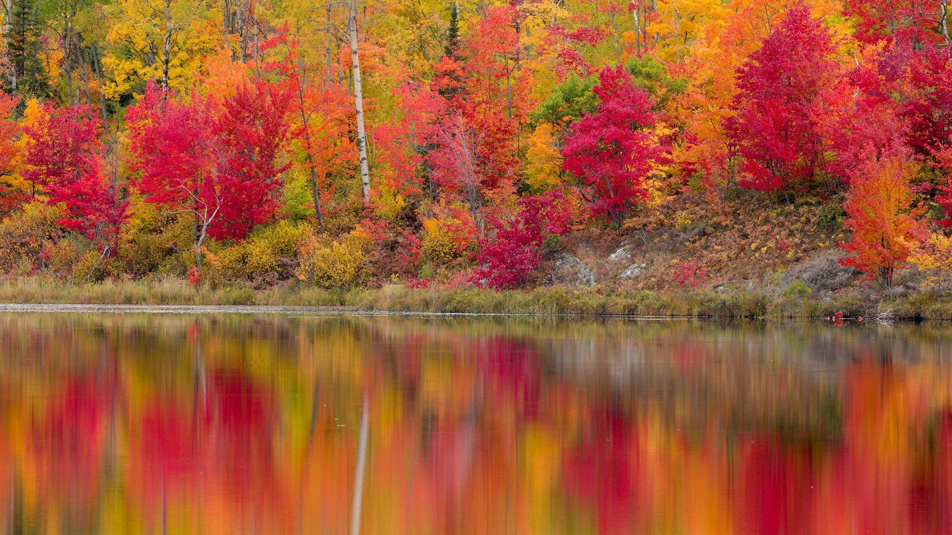 природа деревья река отражение осень nature trees river reflection autumn бесплатно