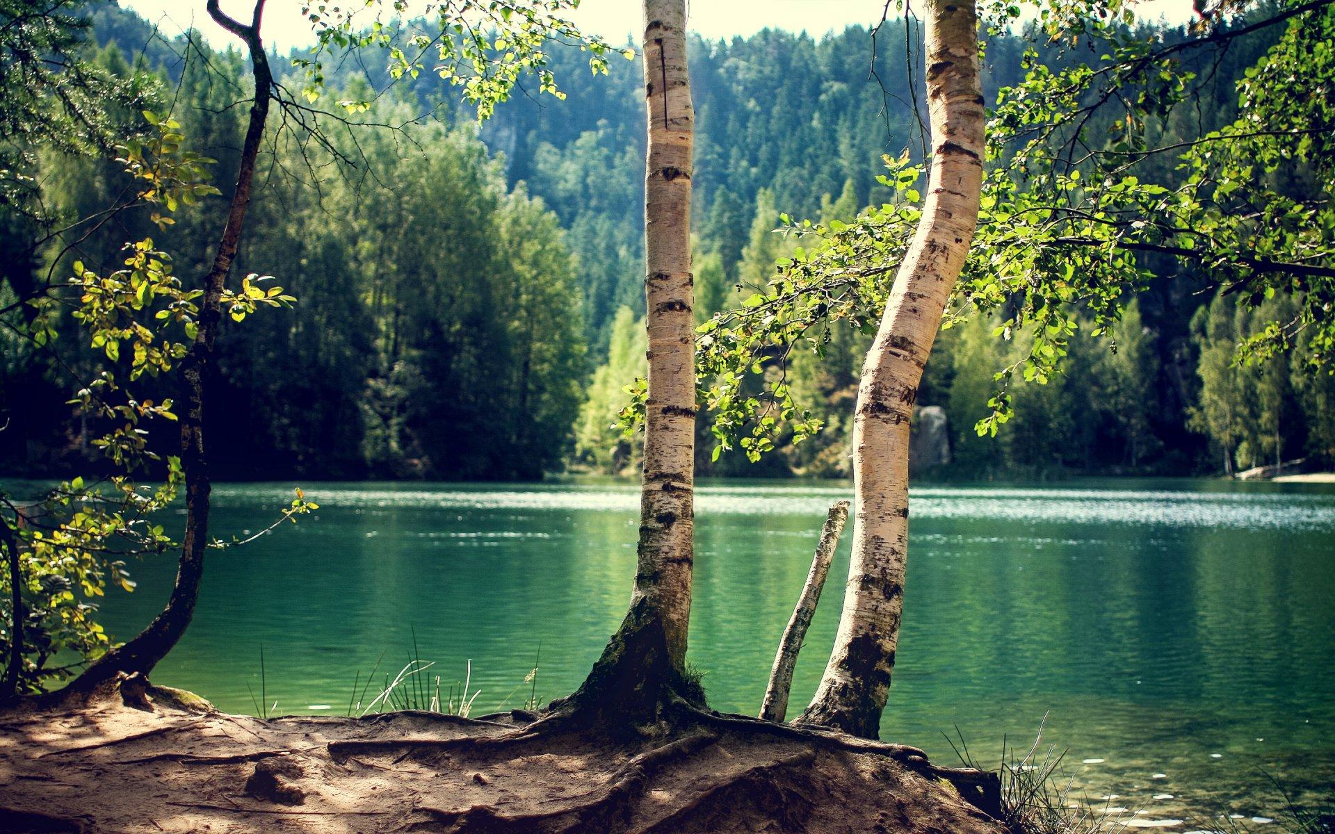 речки дерево картинки