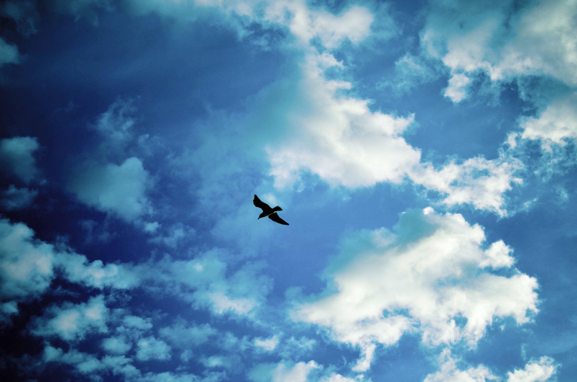 Открытки птицы в небе, женщина