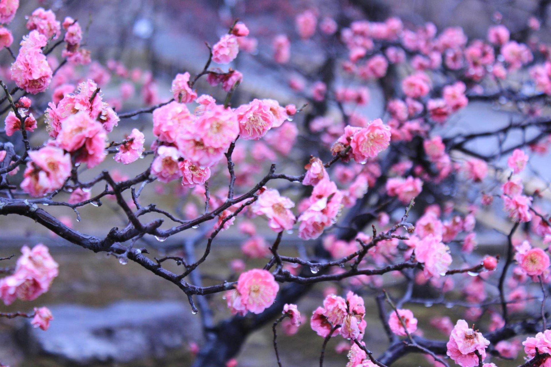 Широкоформатные обои цветы на рабочий стол бесплатные