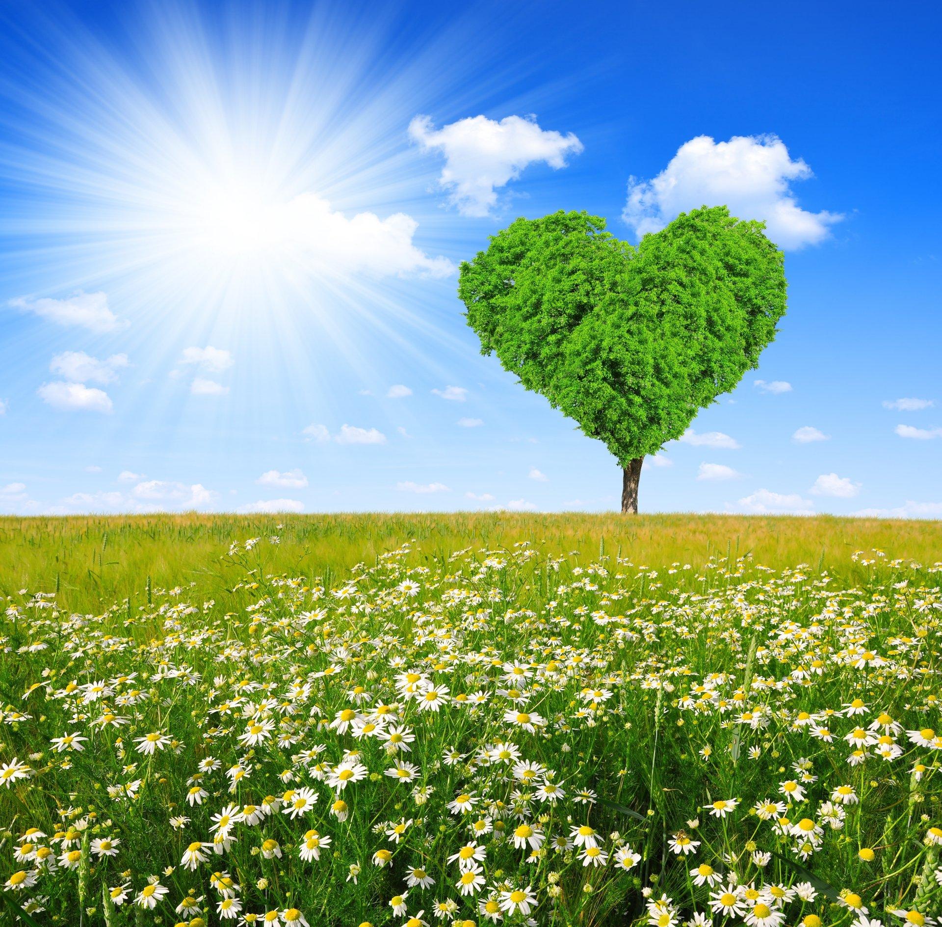 Красивые картинки к природе и любви
