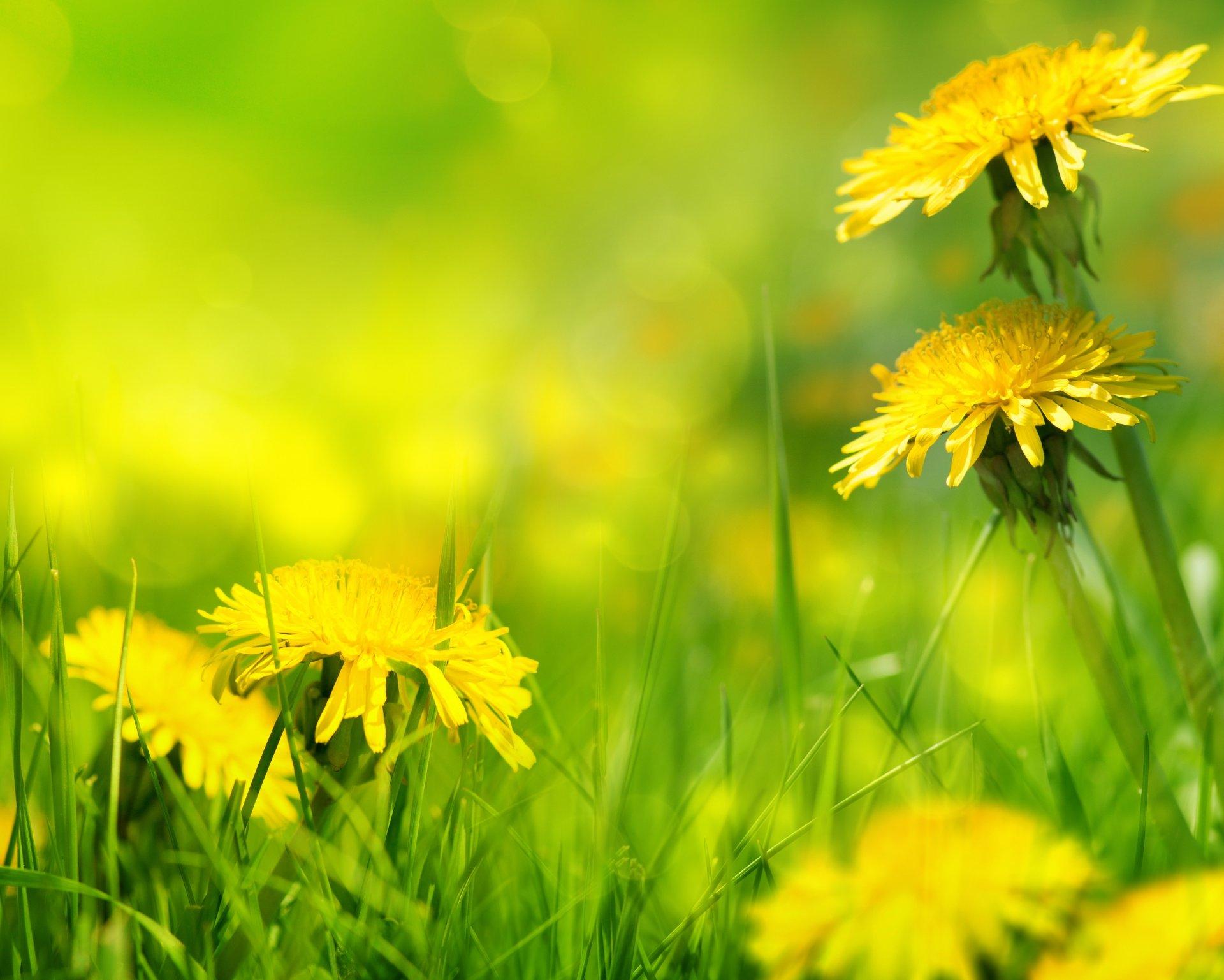 желто зеленые картинки на природе нашем
