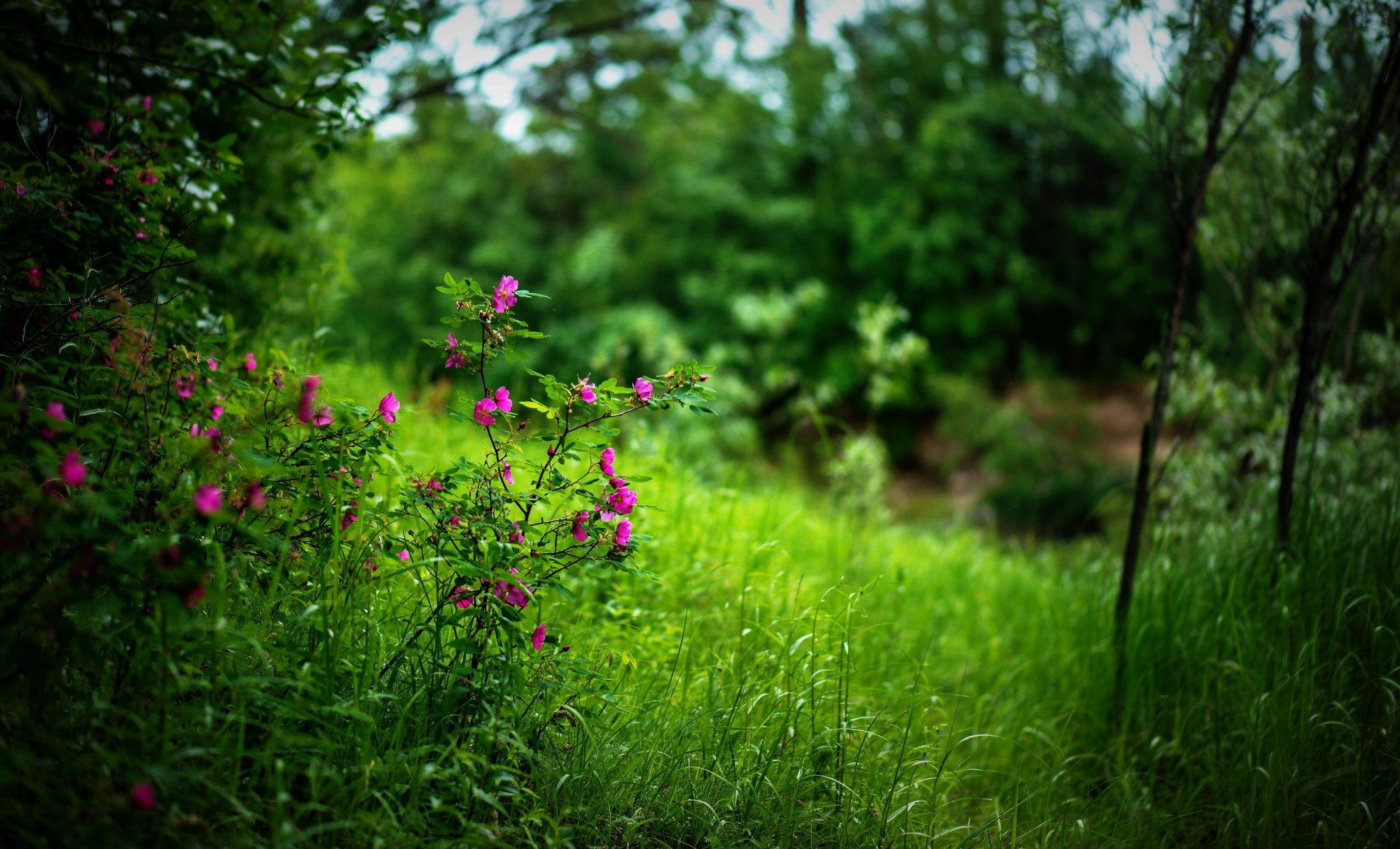 цветы лес зелень лето скачать