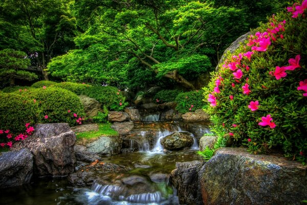 природа парк лес река камни цветы nature Park forest river stones flowers