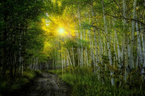 nature sunset sun rays birches forest trees leaves colorful road path autumn fall colors walk листья осень природа деревья дорога лес закат солнце лучи березы