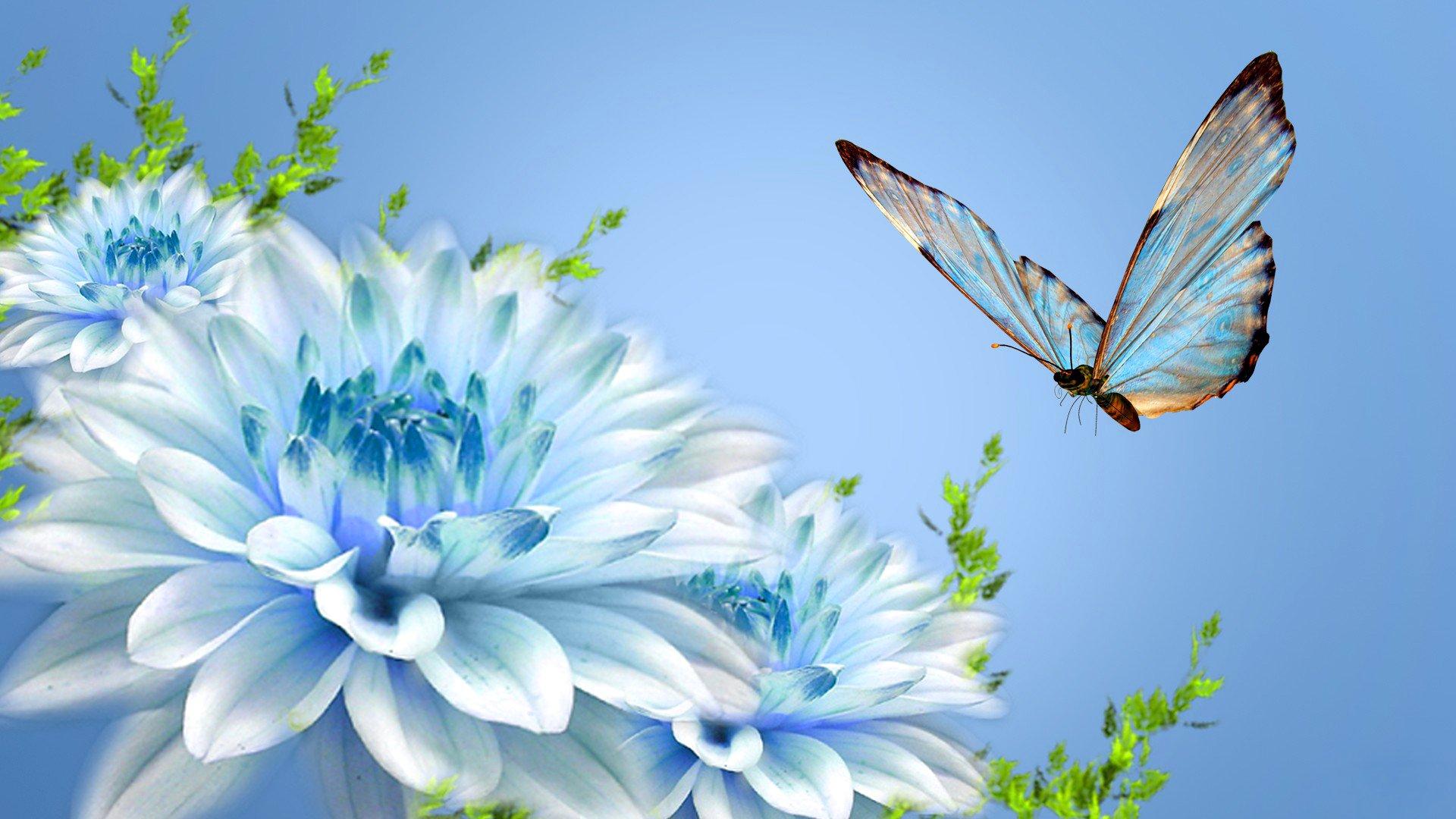 Обои мотылек, цветы, Коллаж. Разное foto 18