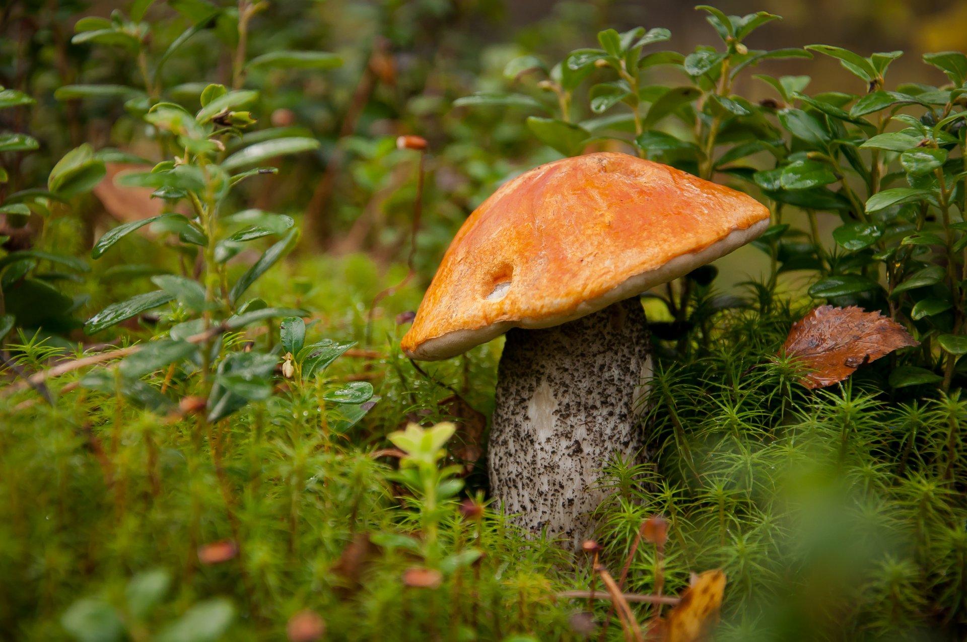 Природа картинки грибы