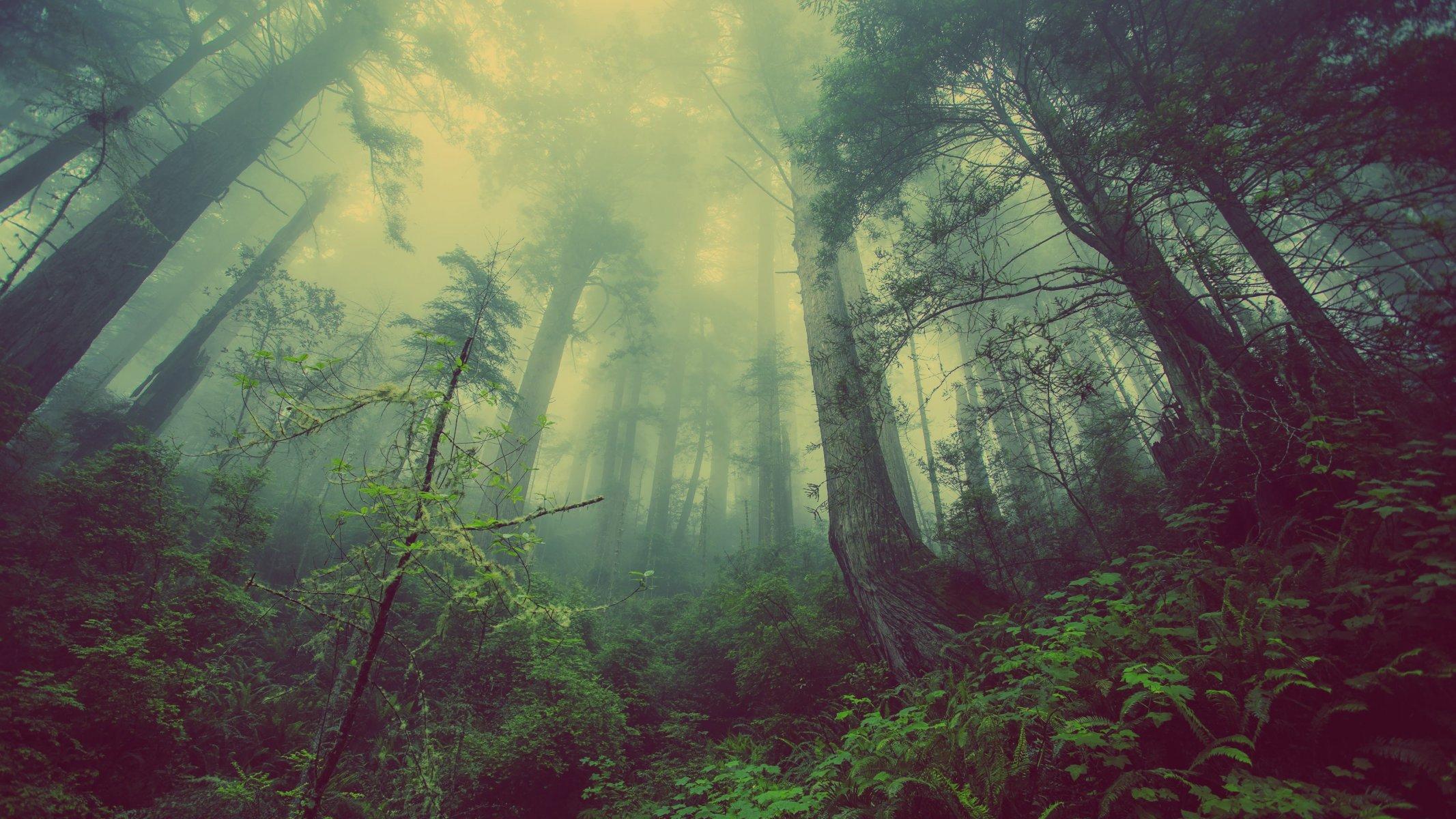 Trees, forest, deer, night, jungle, light, darkness, butterflies, fantasy, screenshot, habitat, natural
