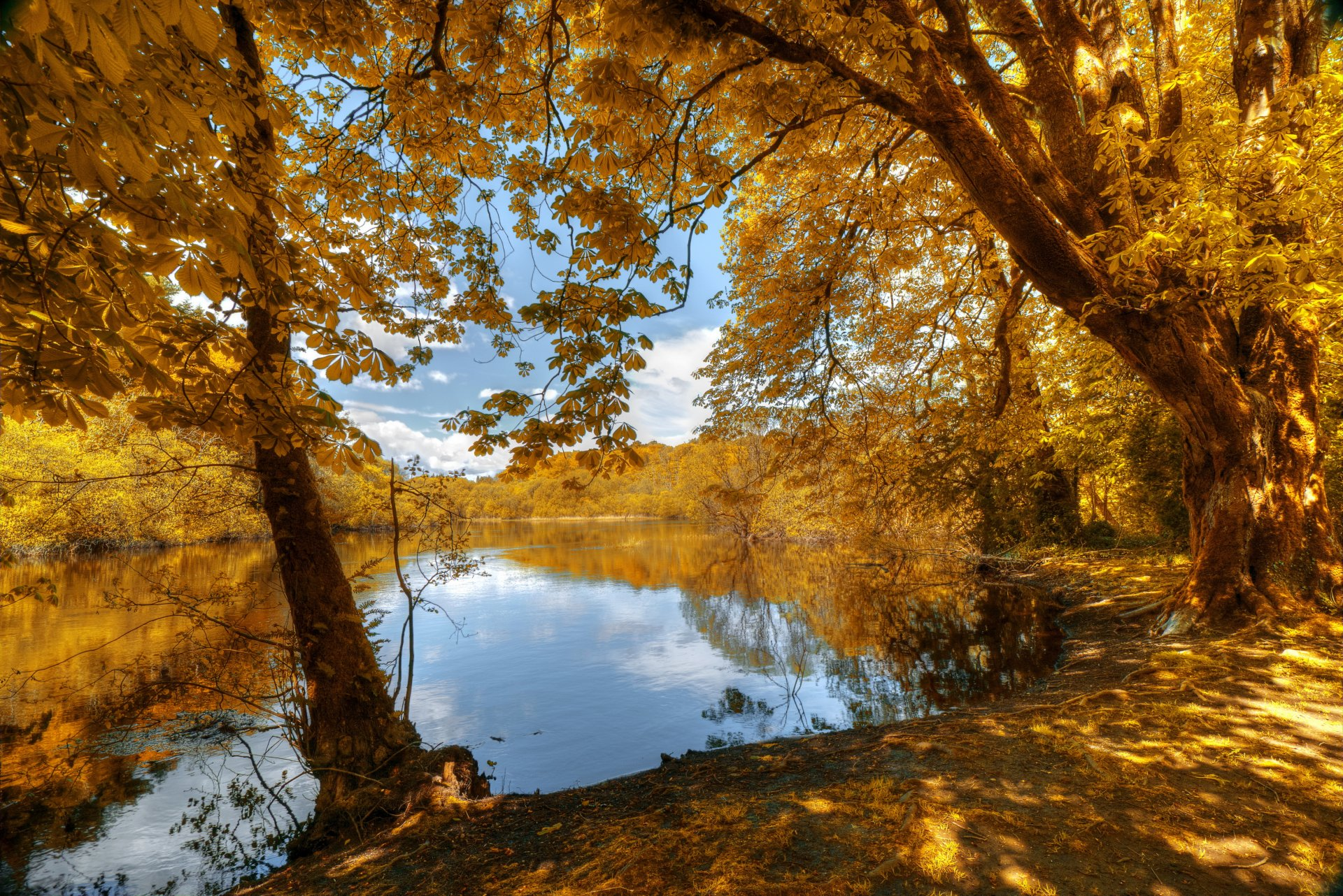 золотая осень лучшие фотопейзажи девушки женщины
