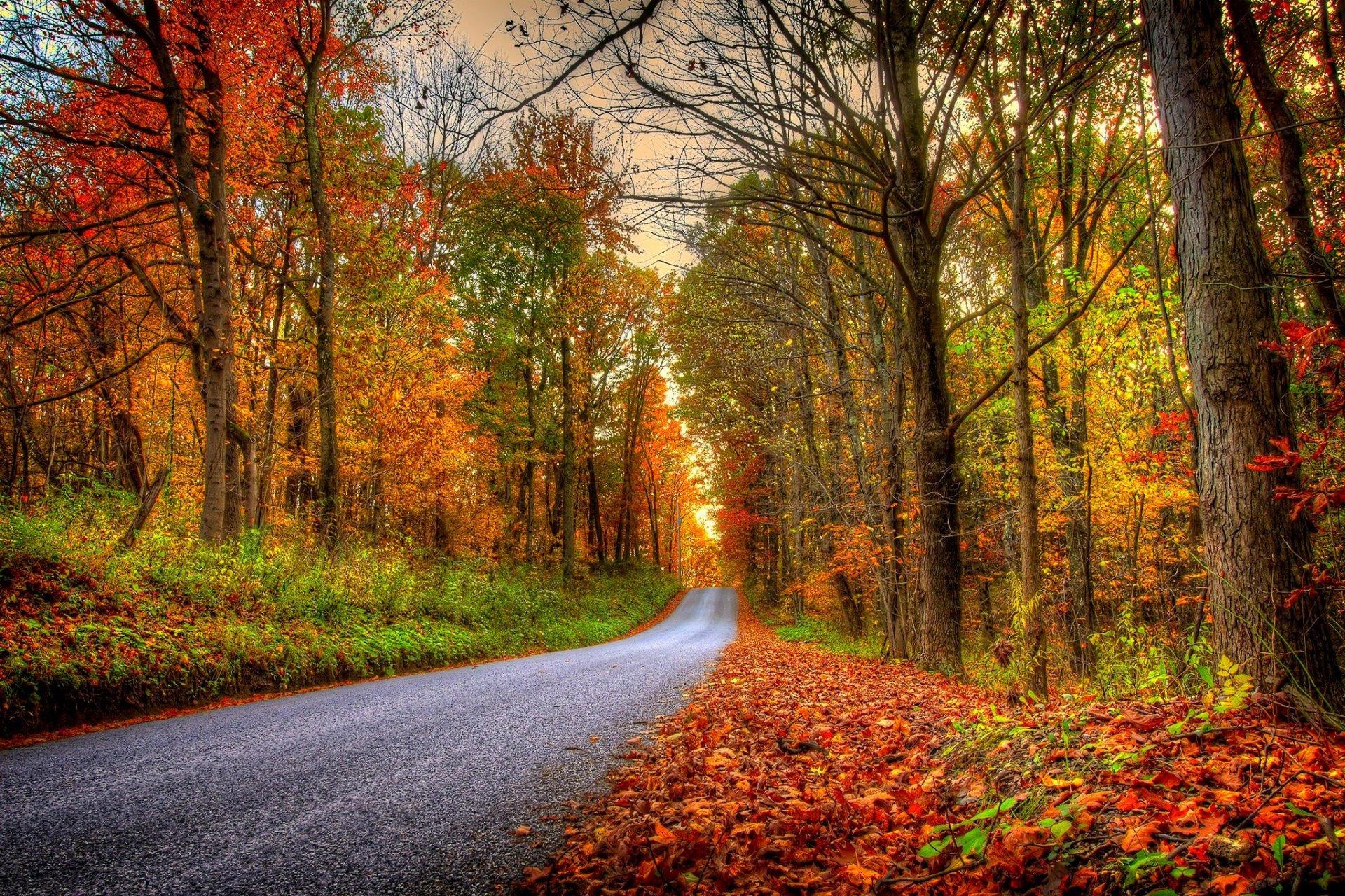 Давай, фото красивые осень