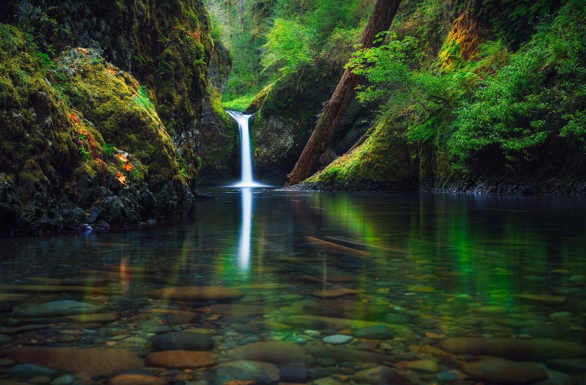 короткая обои лесной водопад вместе нежными