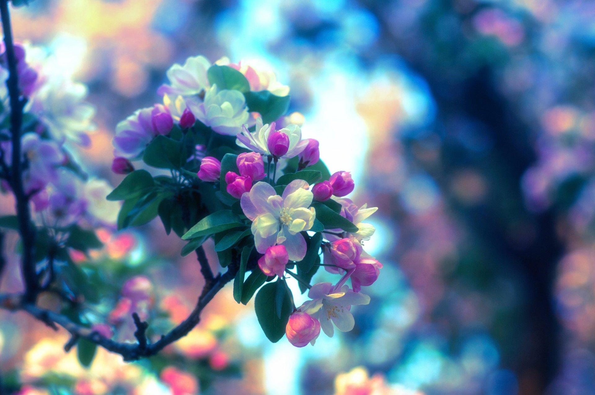 Картинка весна для обоев телефона