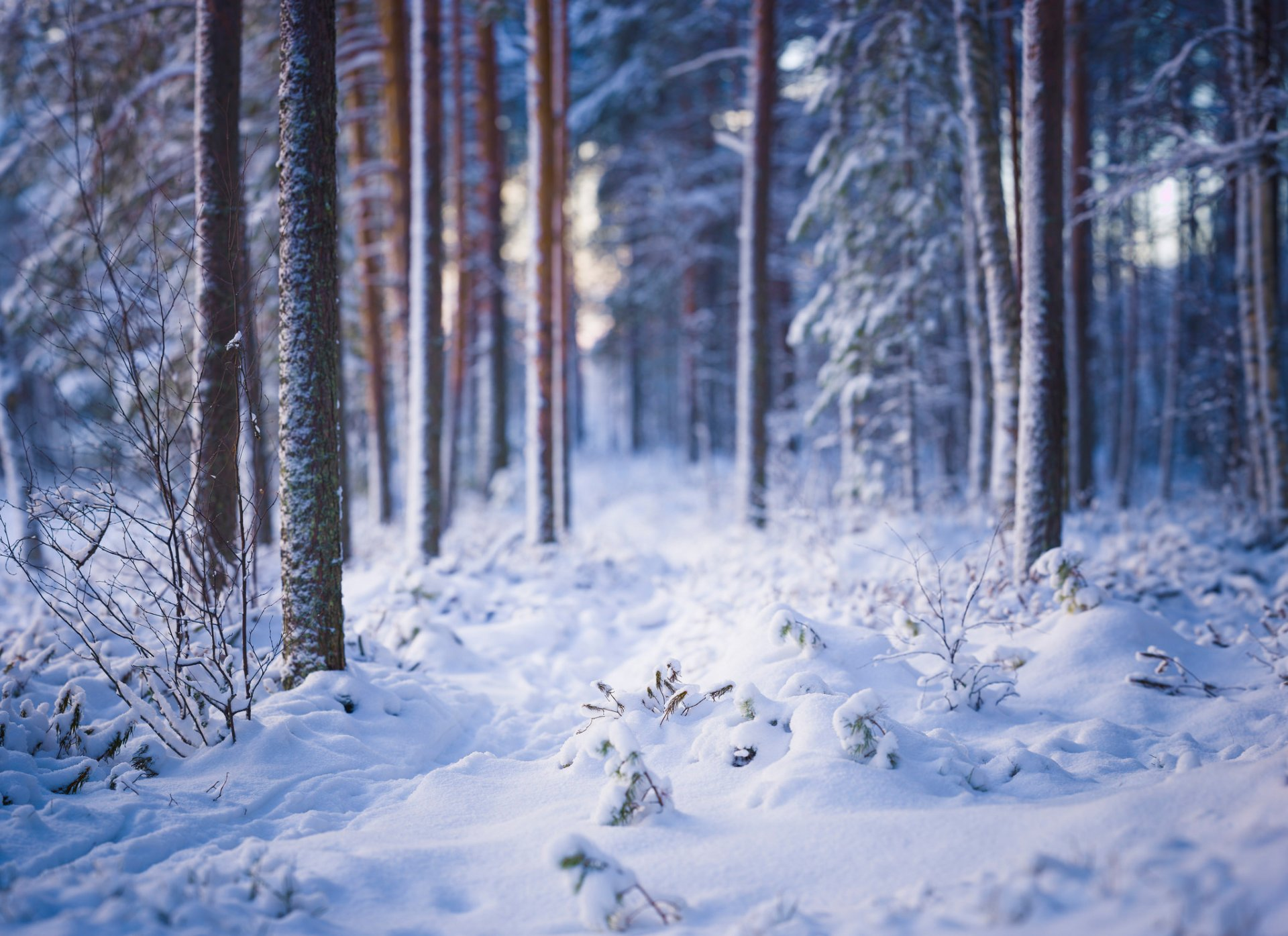 поляна в лесу зимой картинки