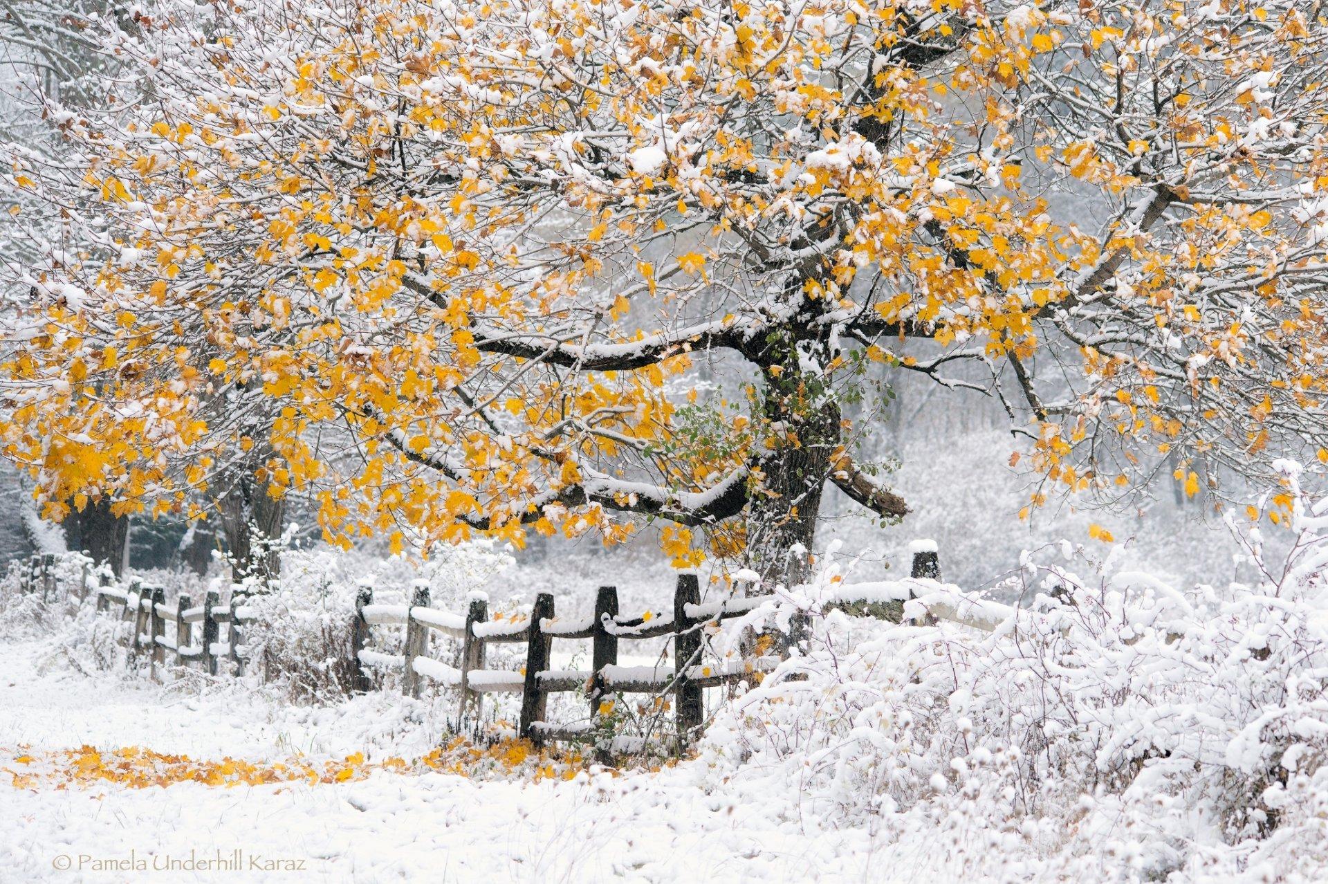 осень первый снег обои рабочего стола № 636987 загрузить