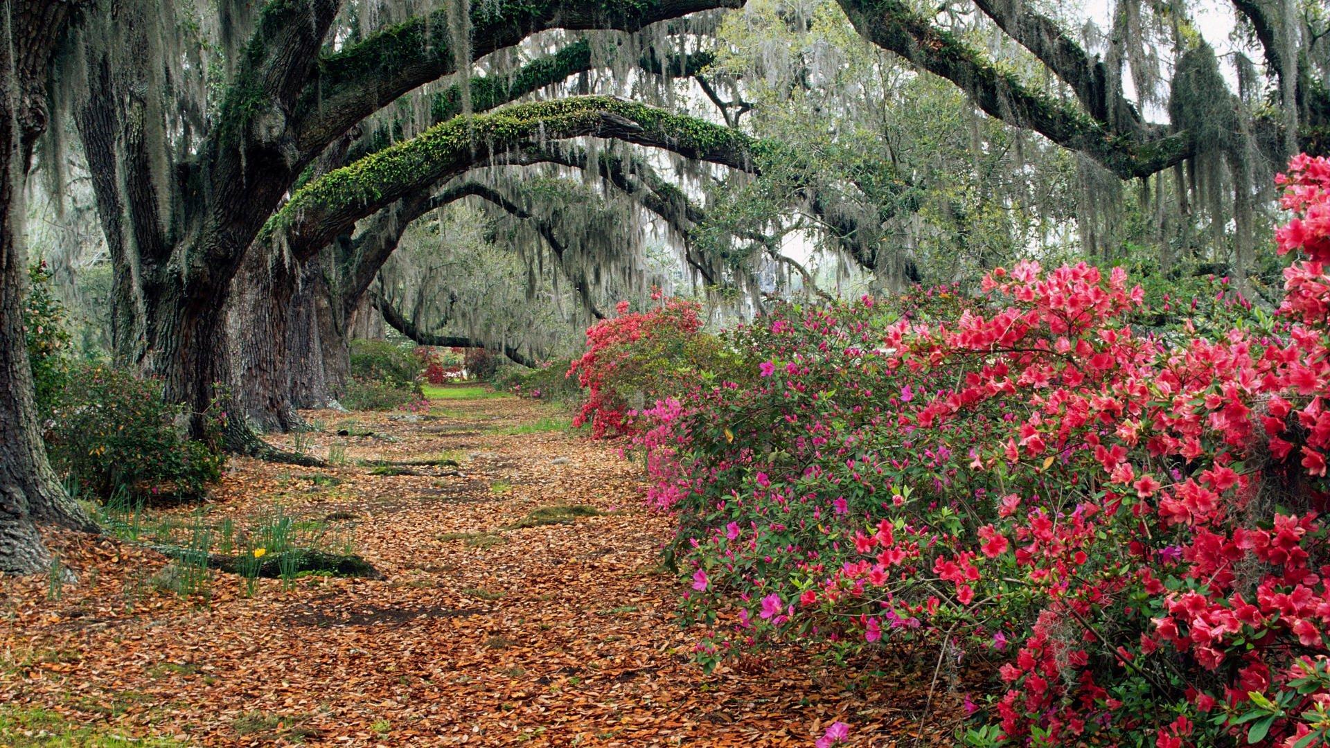 река, кустарник, цветы без регистрации