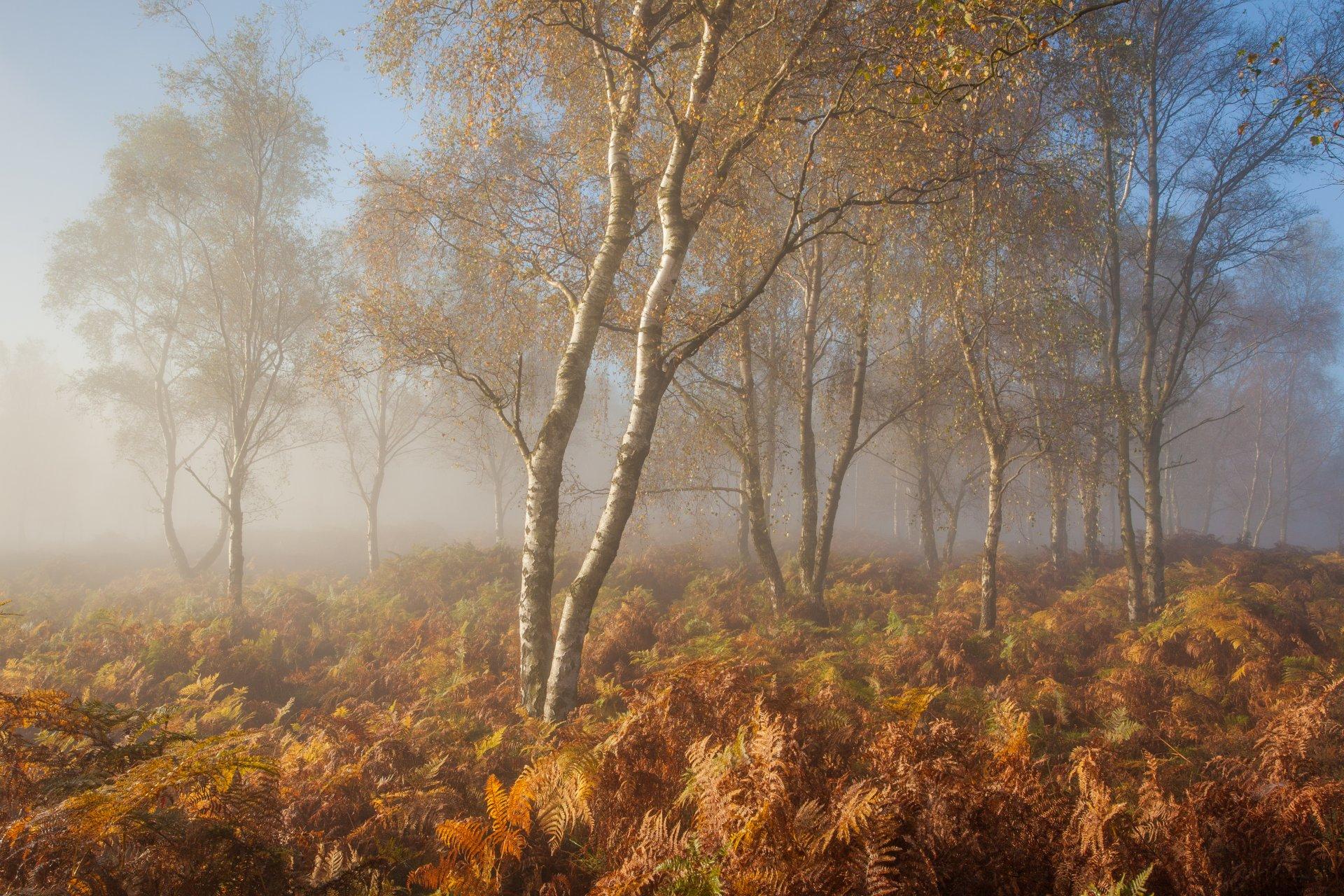Изображением материалов, осеннее утро в лесу картинки