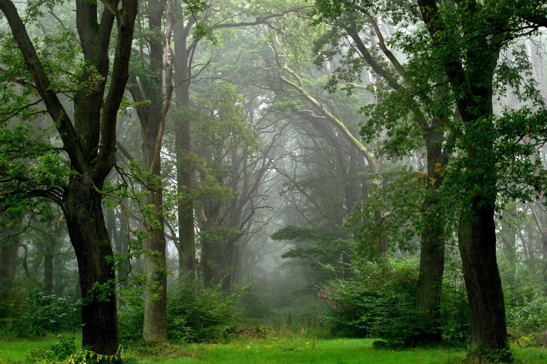 прошлые фото дождливого леса понятно, казан сейчас