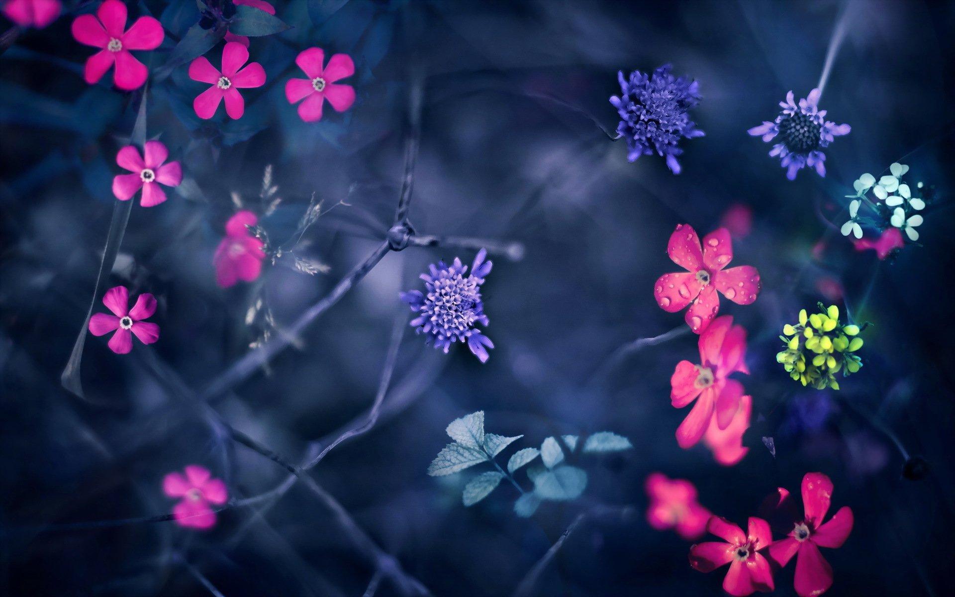 Картинки цветов на телефон андроид