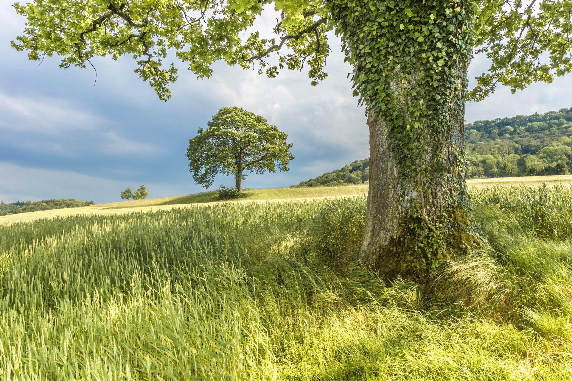 склон зелень лето бесплатно