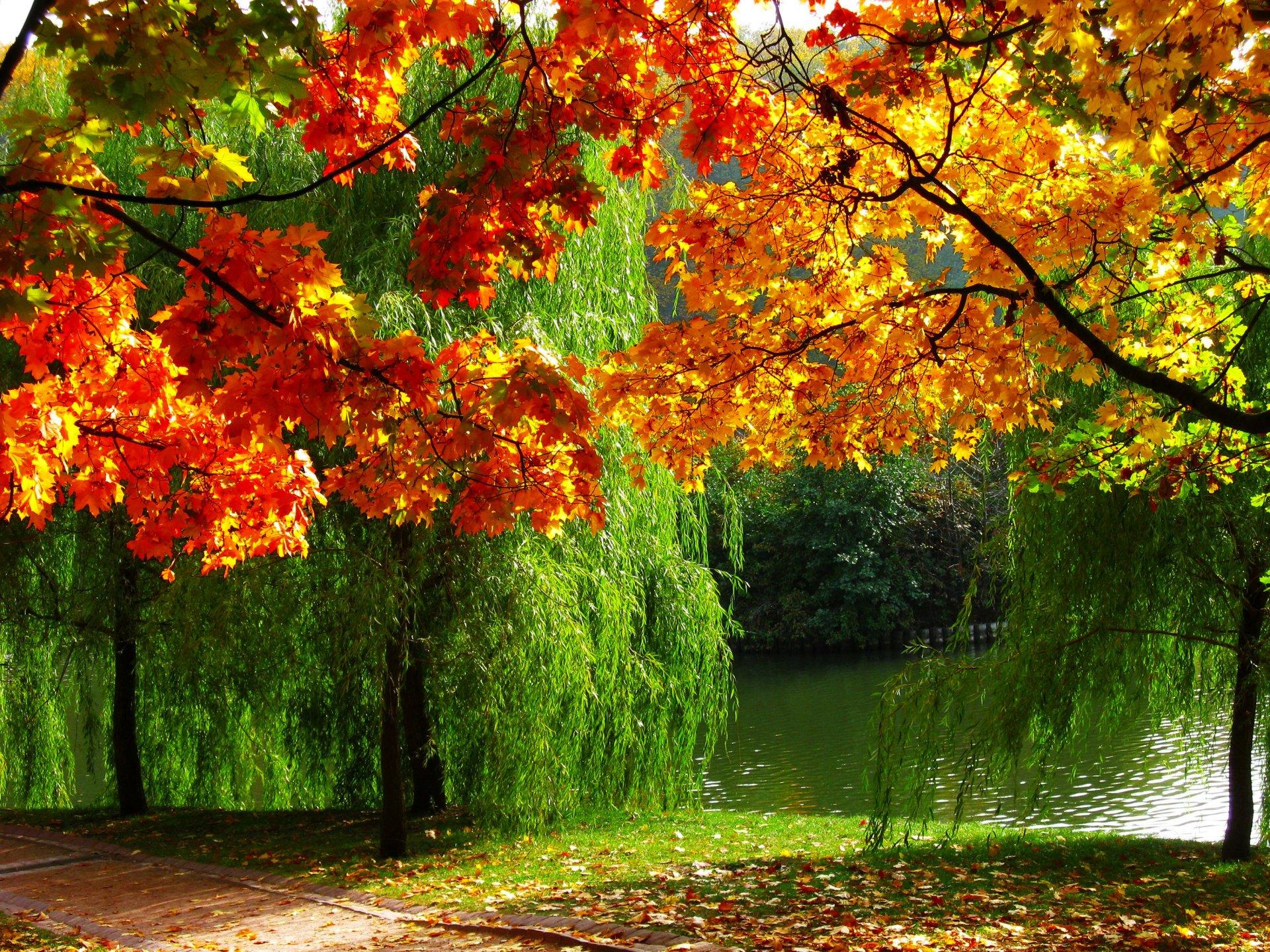 Красивые открытки на заставку осень
