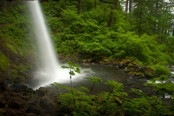 Ponytail Falls Columbia River Oregon река Колумбия Орегон водопад поток лес
