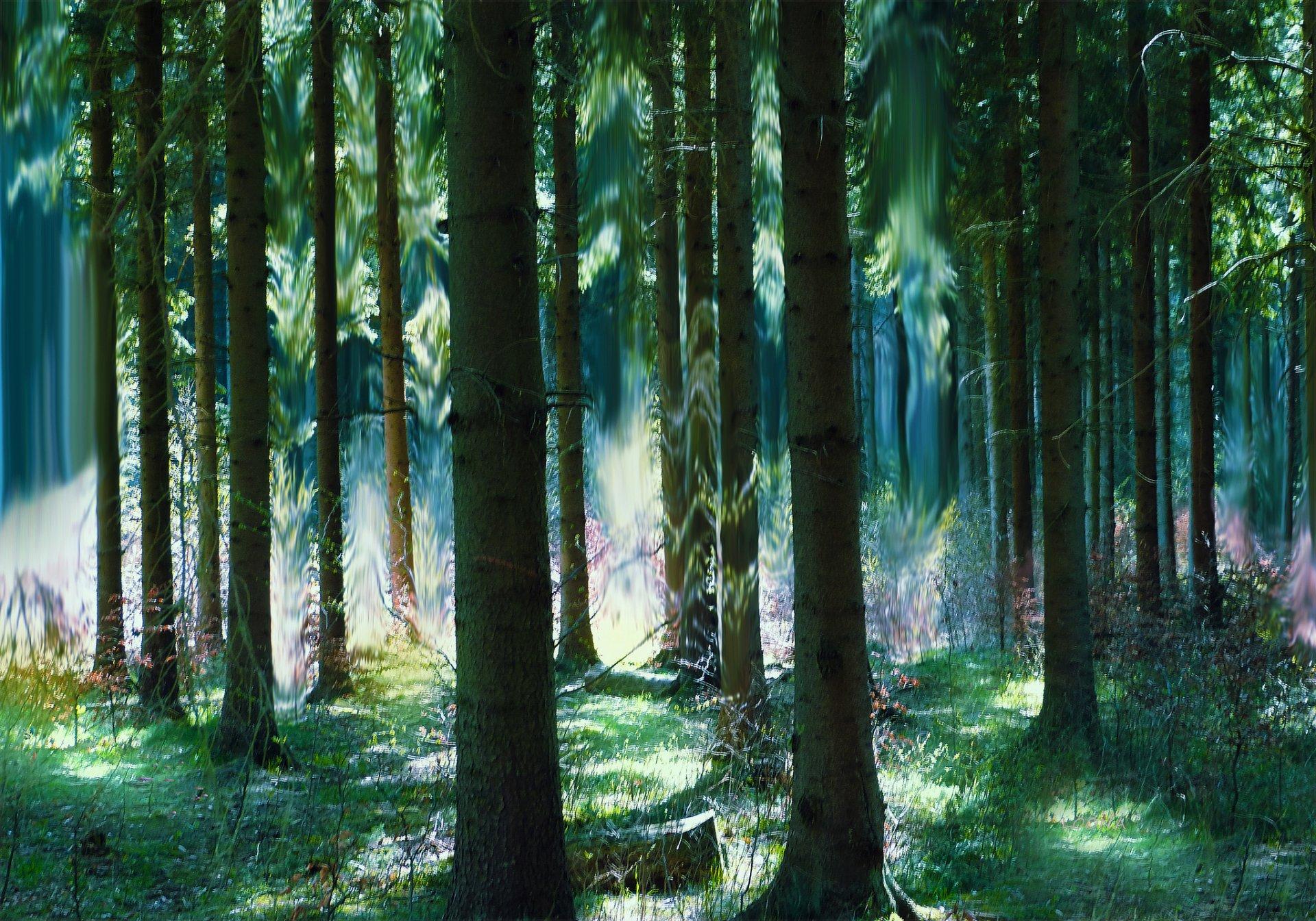 картинка сказочного леса летом нашем салоне