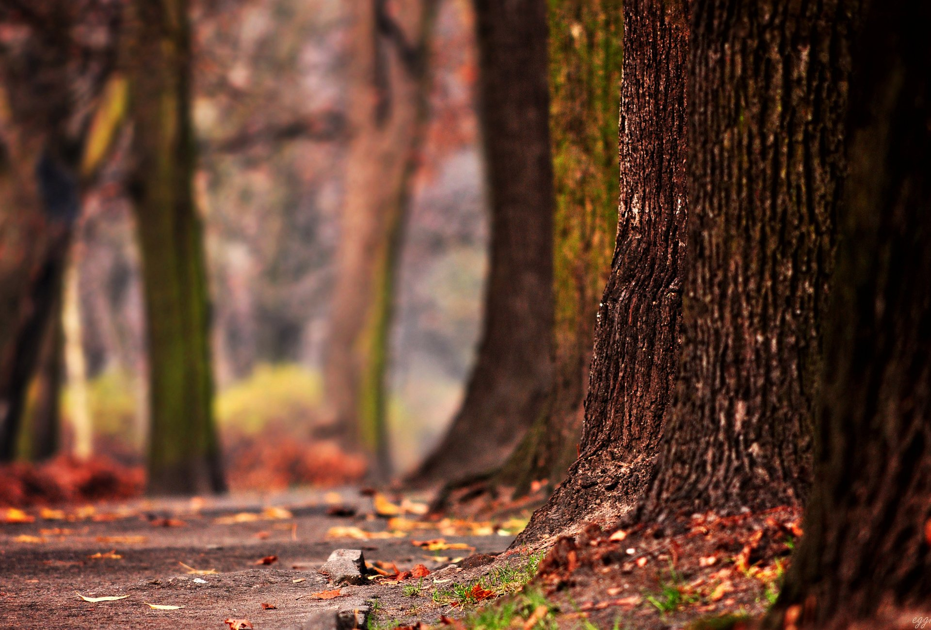 Ствол осеннего дерева загрузить