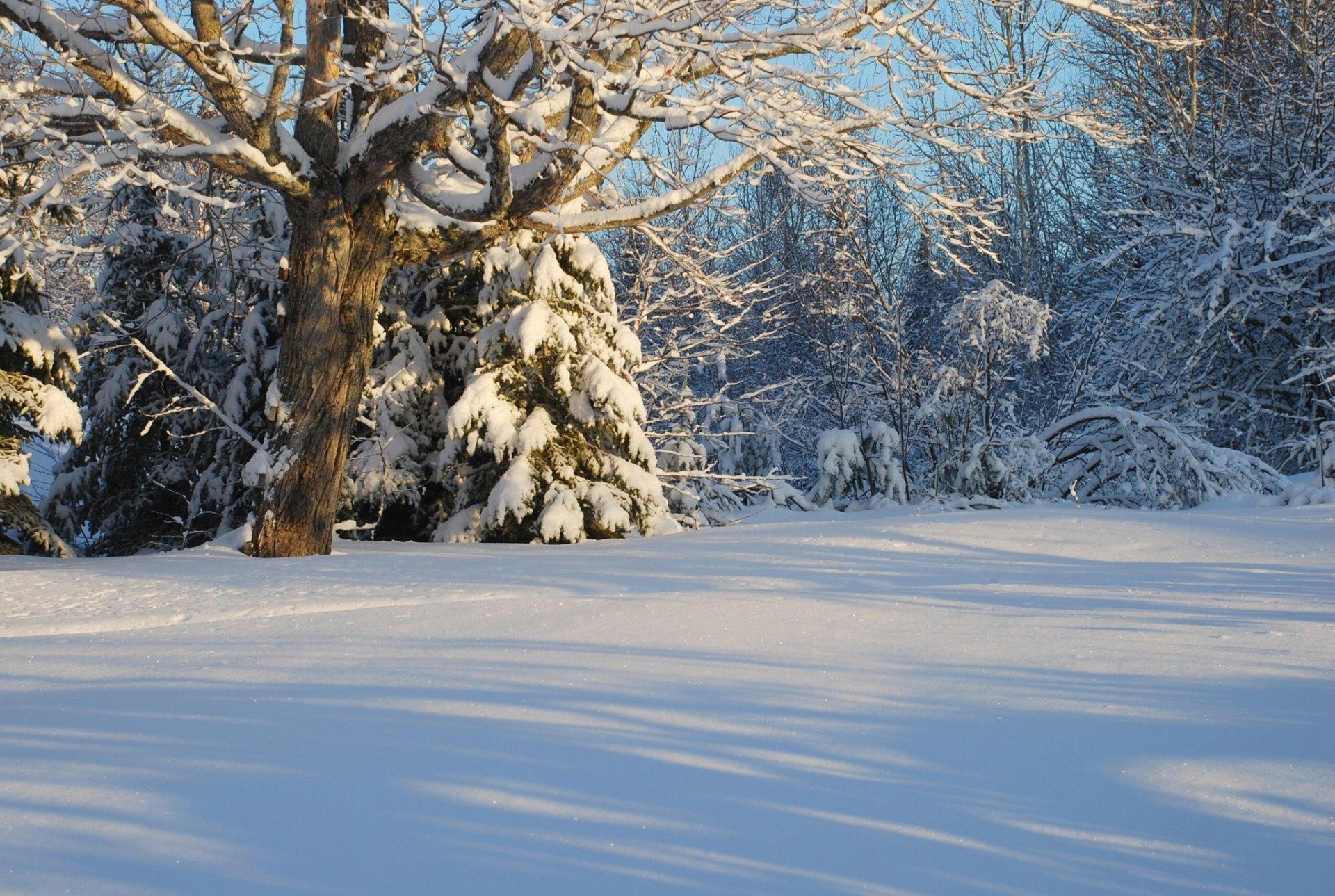 Картинки леса зимой для детей, надписями