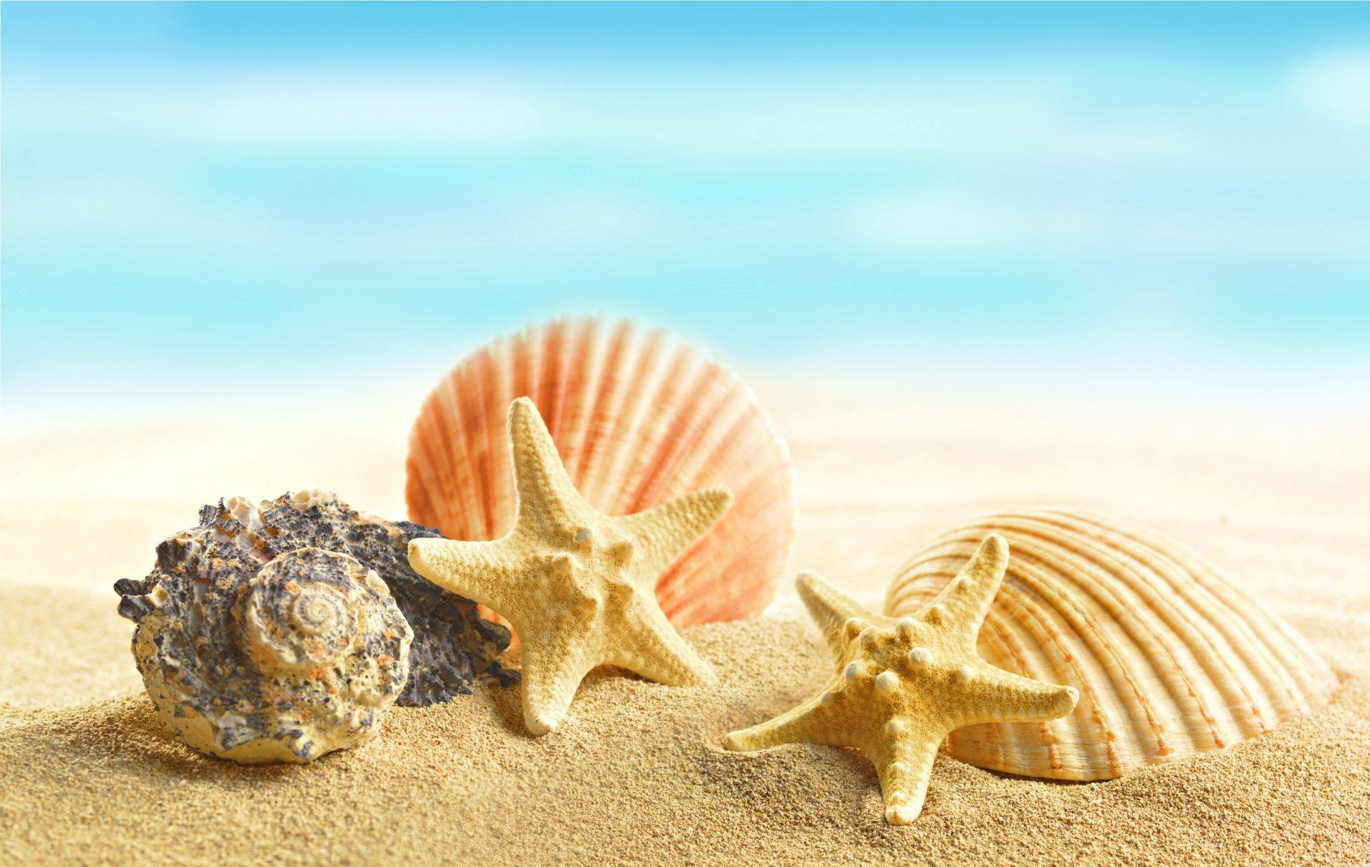 красивая картинка море песок ракушки видишь