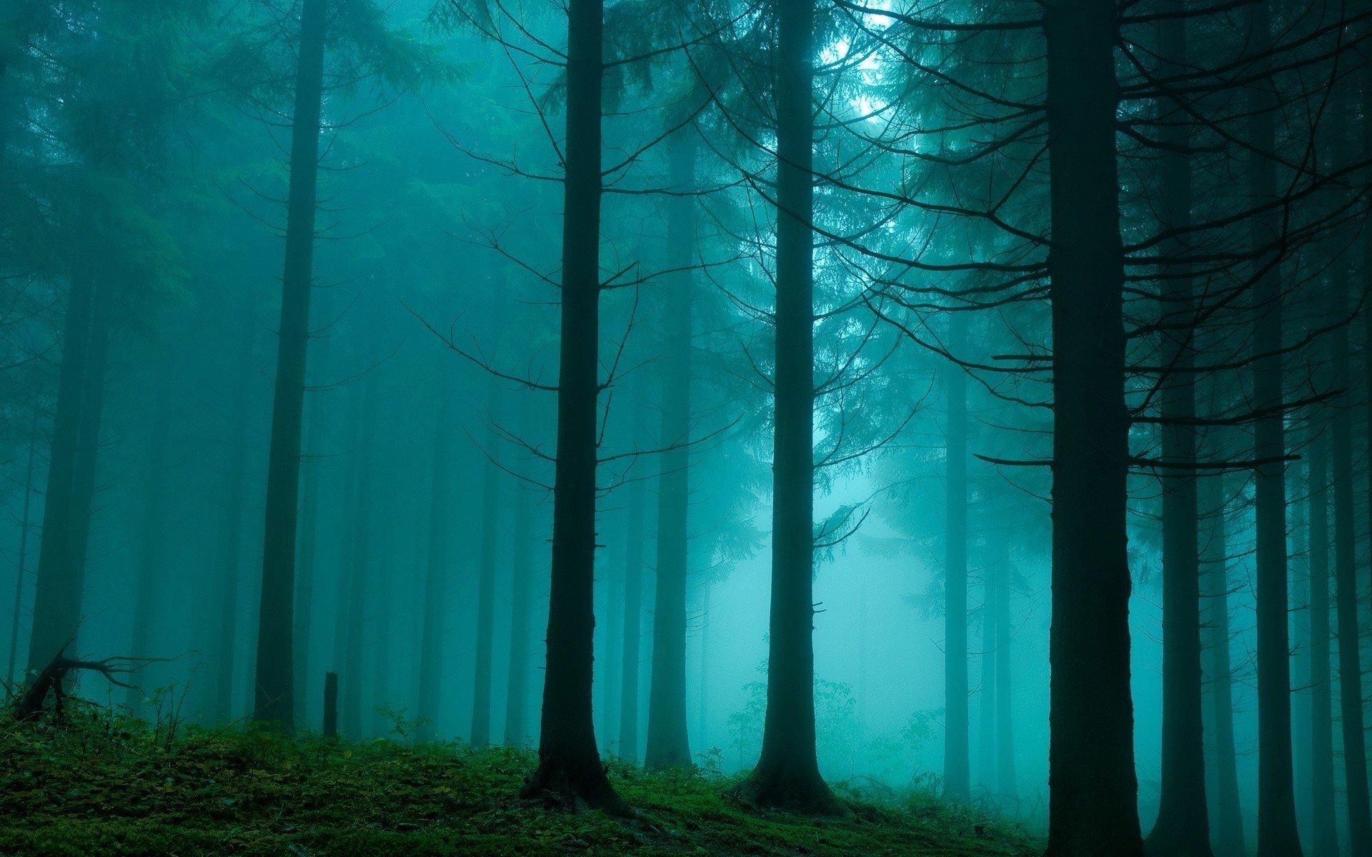 обои на рабочий стол лес в тумане hd № 251963  скачать
