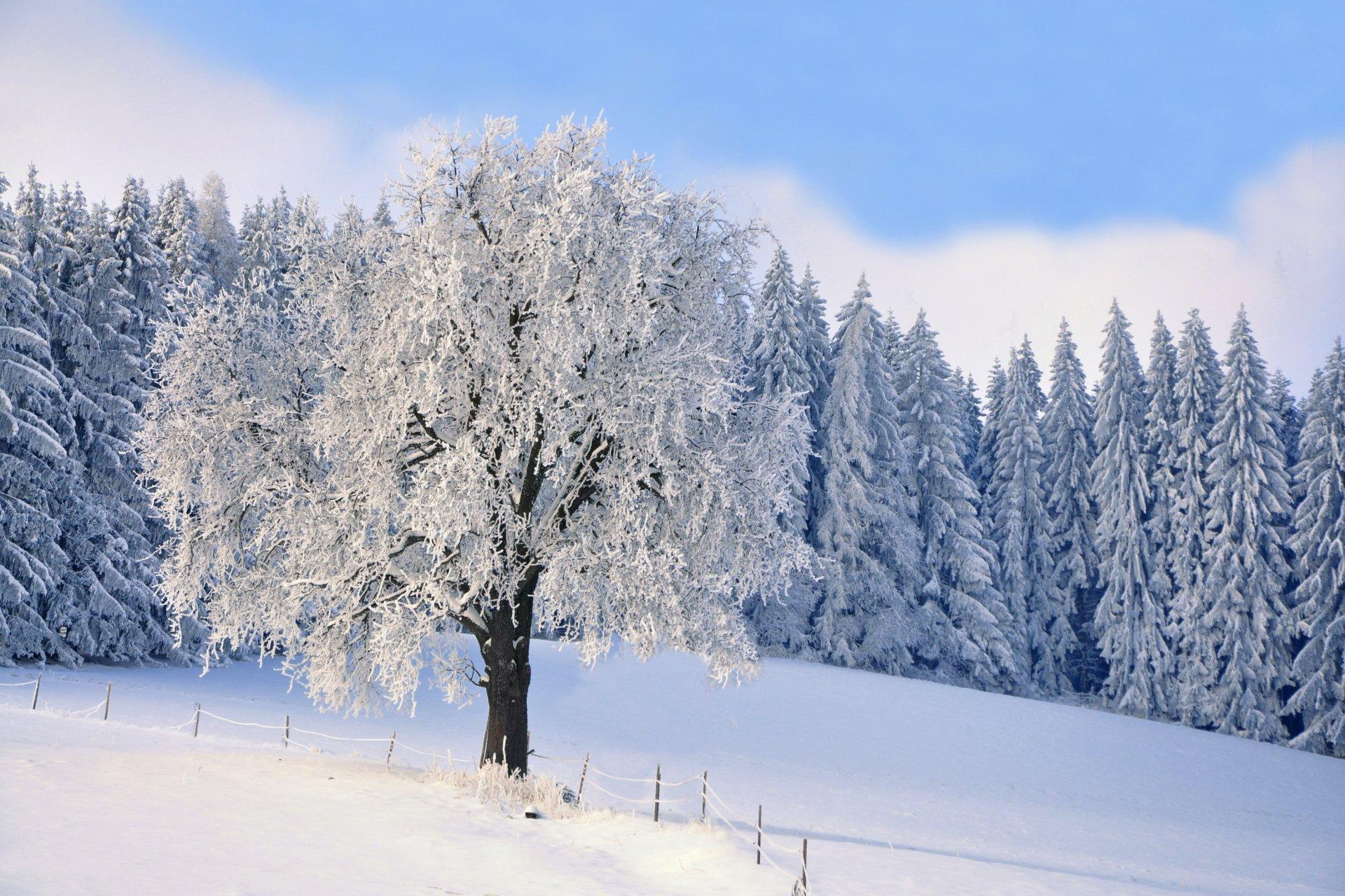 нем картинка лес зима деревья статья
