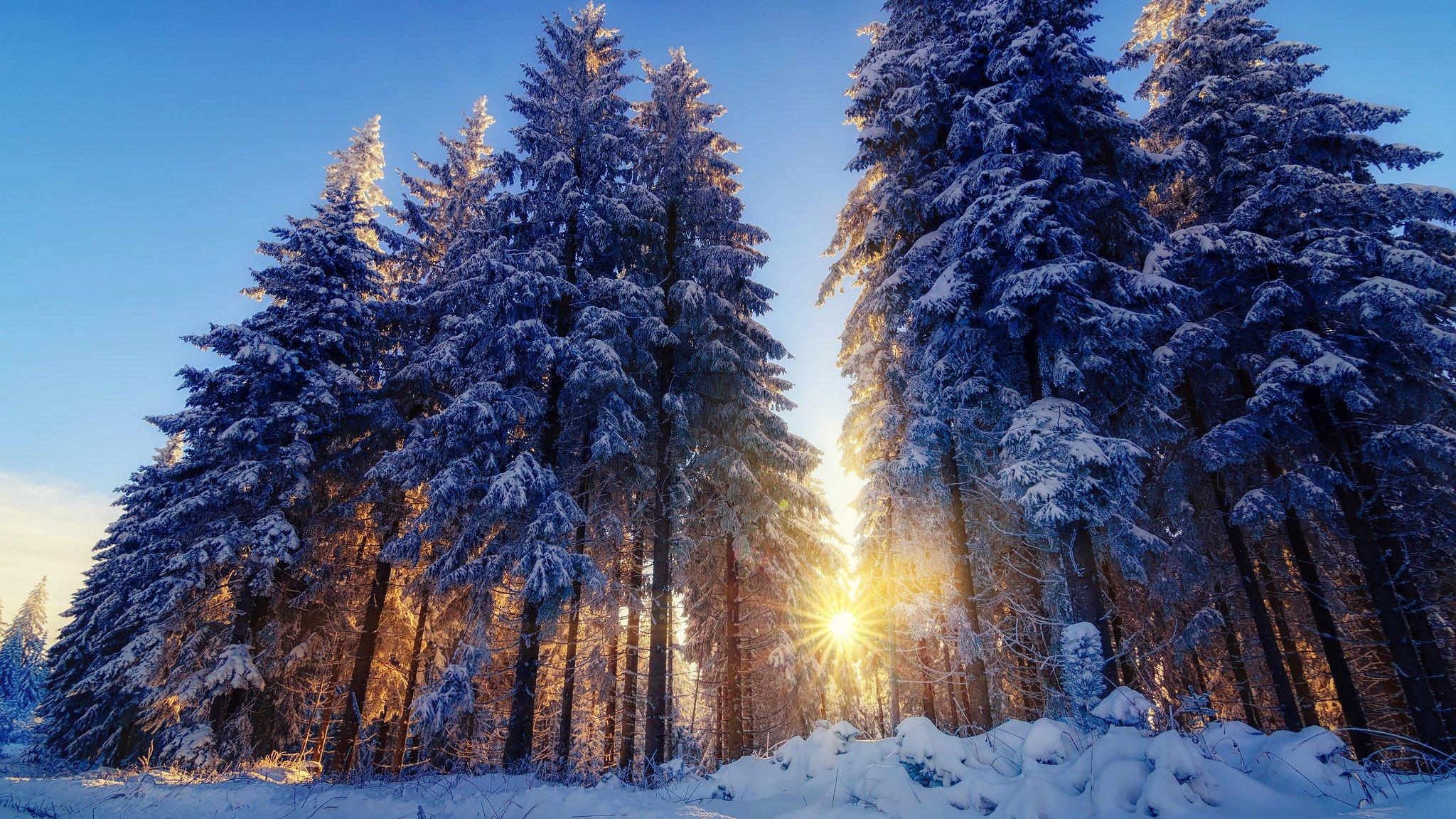 снег зима лучи деревья snow winter rays trees бесплатно
