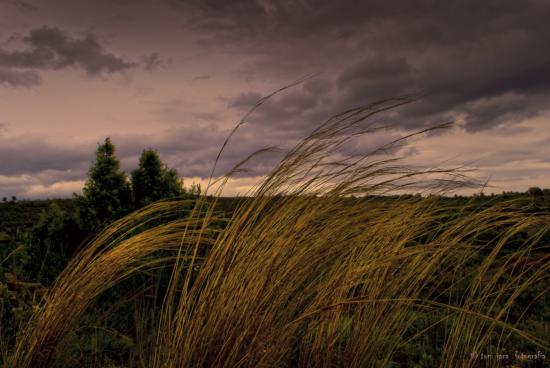 Песни о ветре...